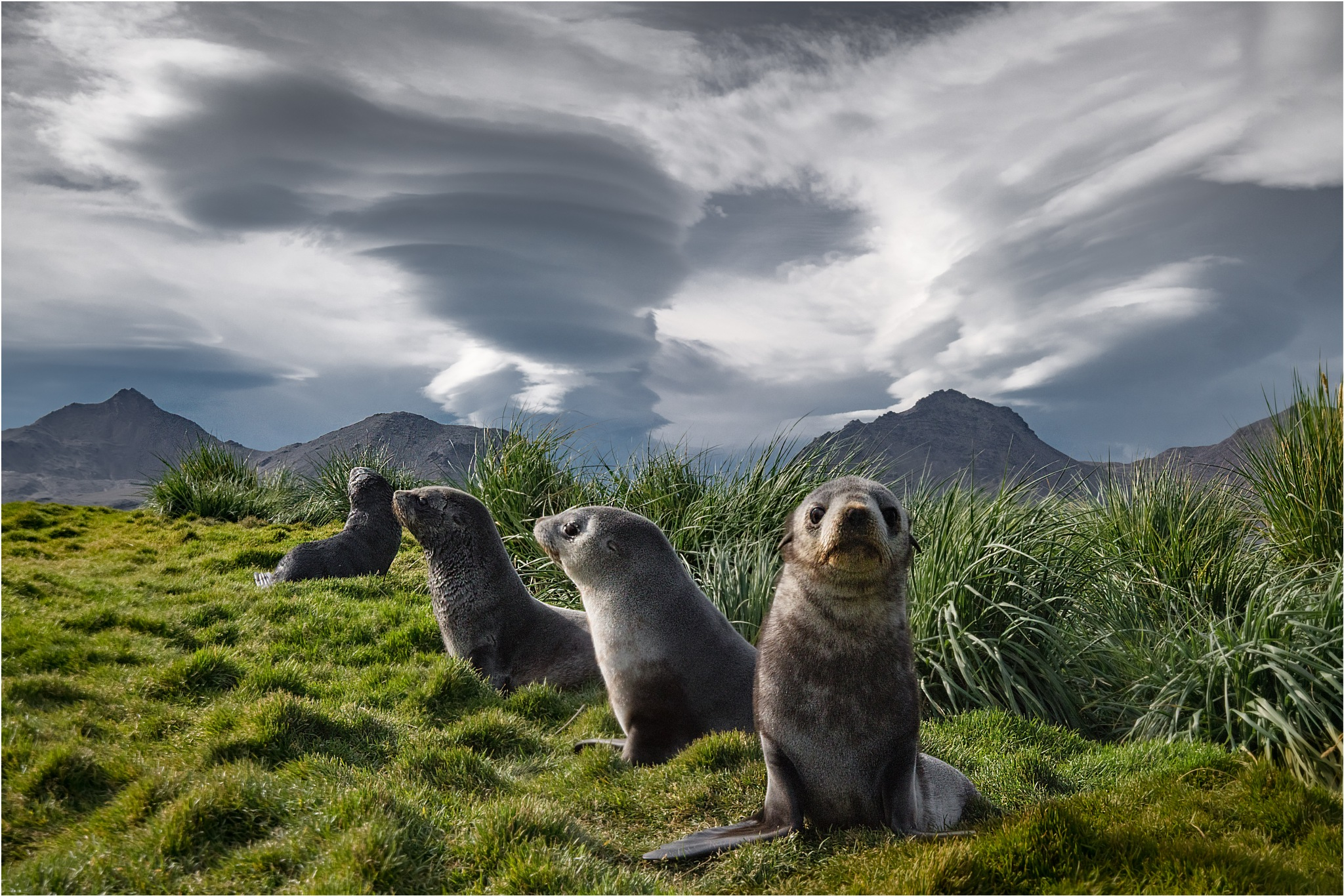 Clouds and Seals by Dr. Ortwin Khan