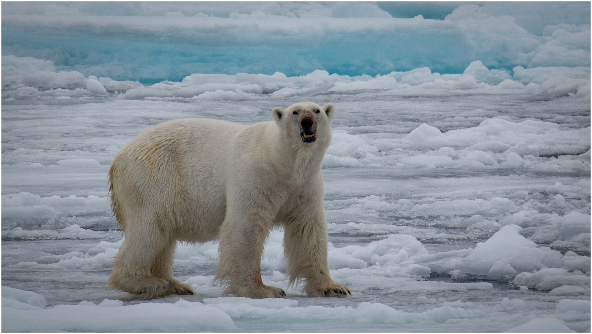 King of the Arctic by Dr. Ortwin Khan