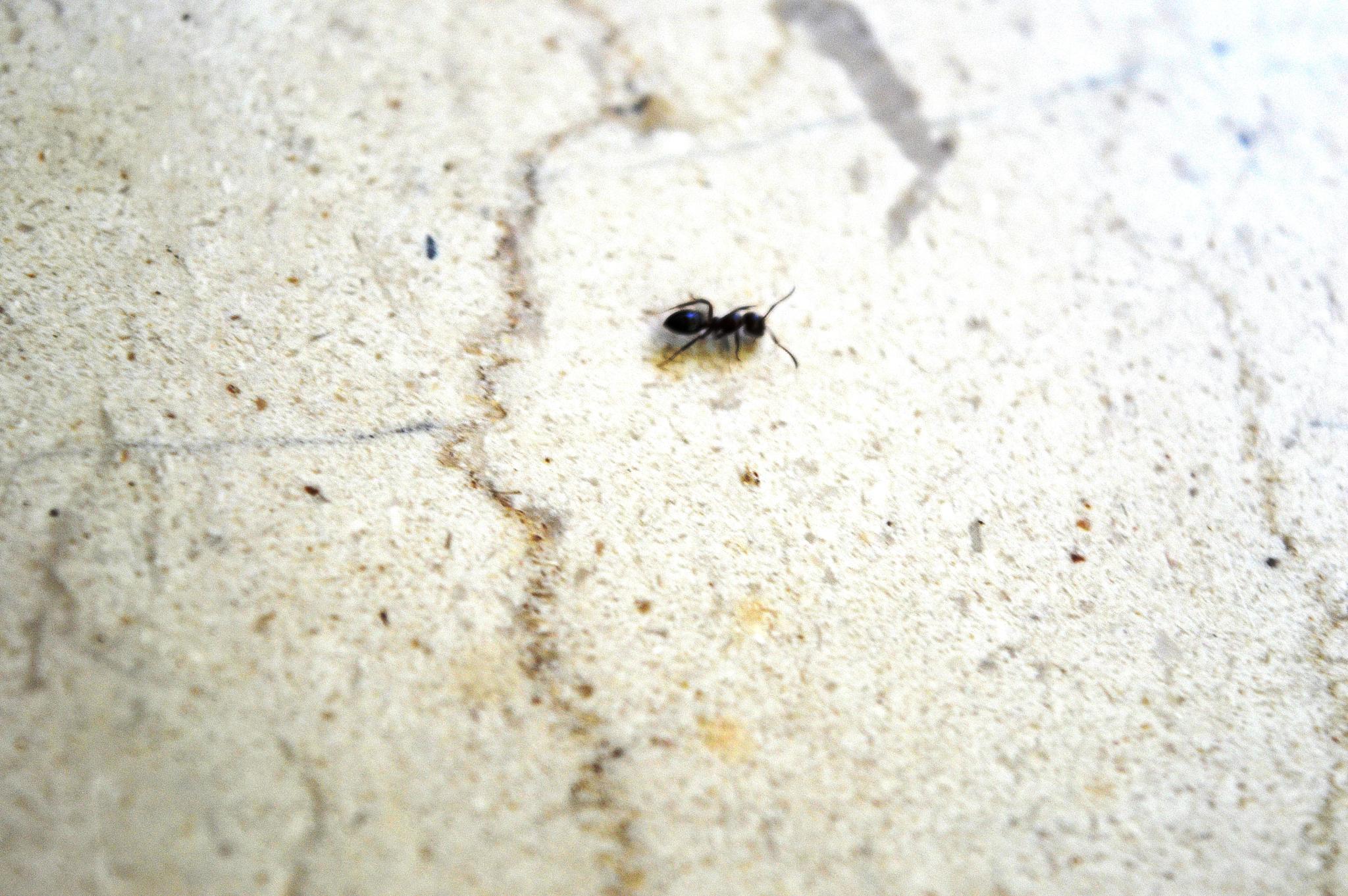 Ant by Ahi Von B
