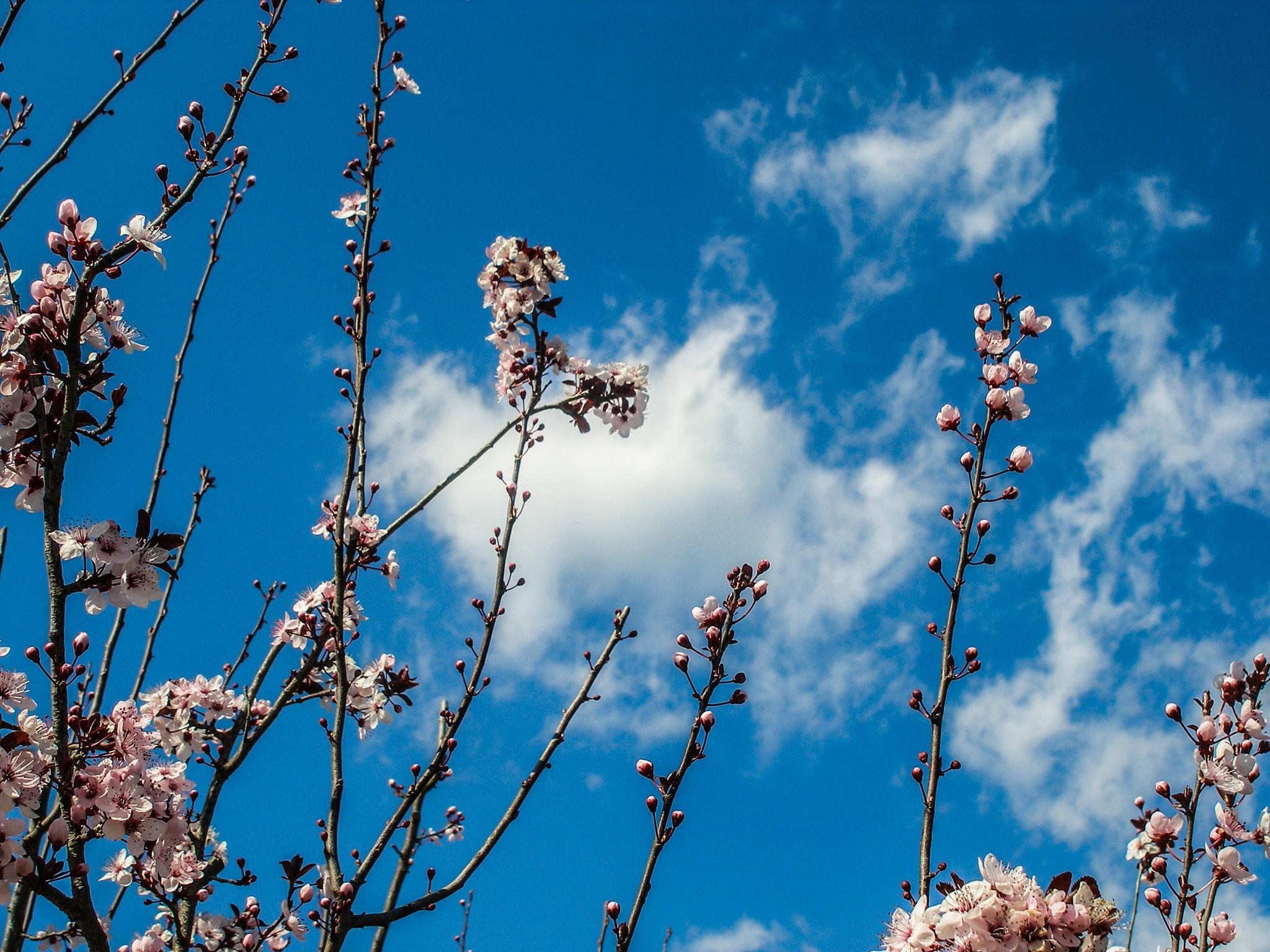 Flowers by Ahi Von B