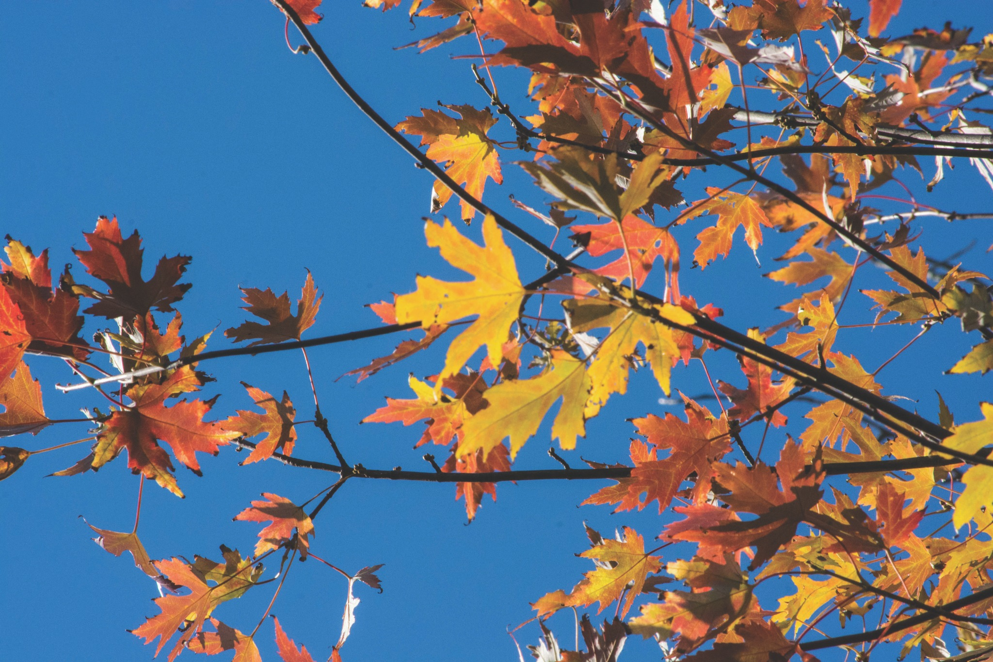Fall leave's by Kevin M Hussey