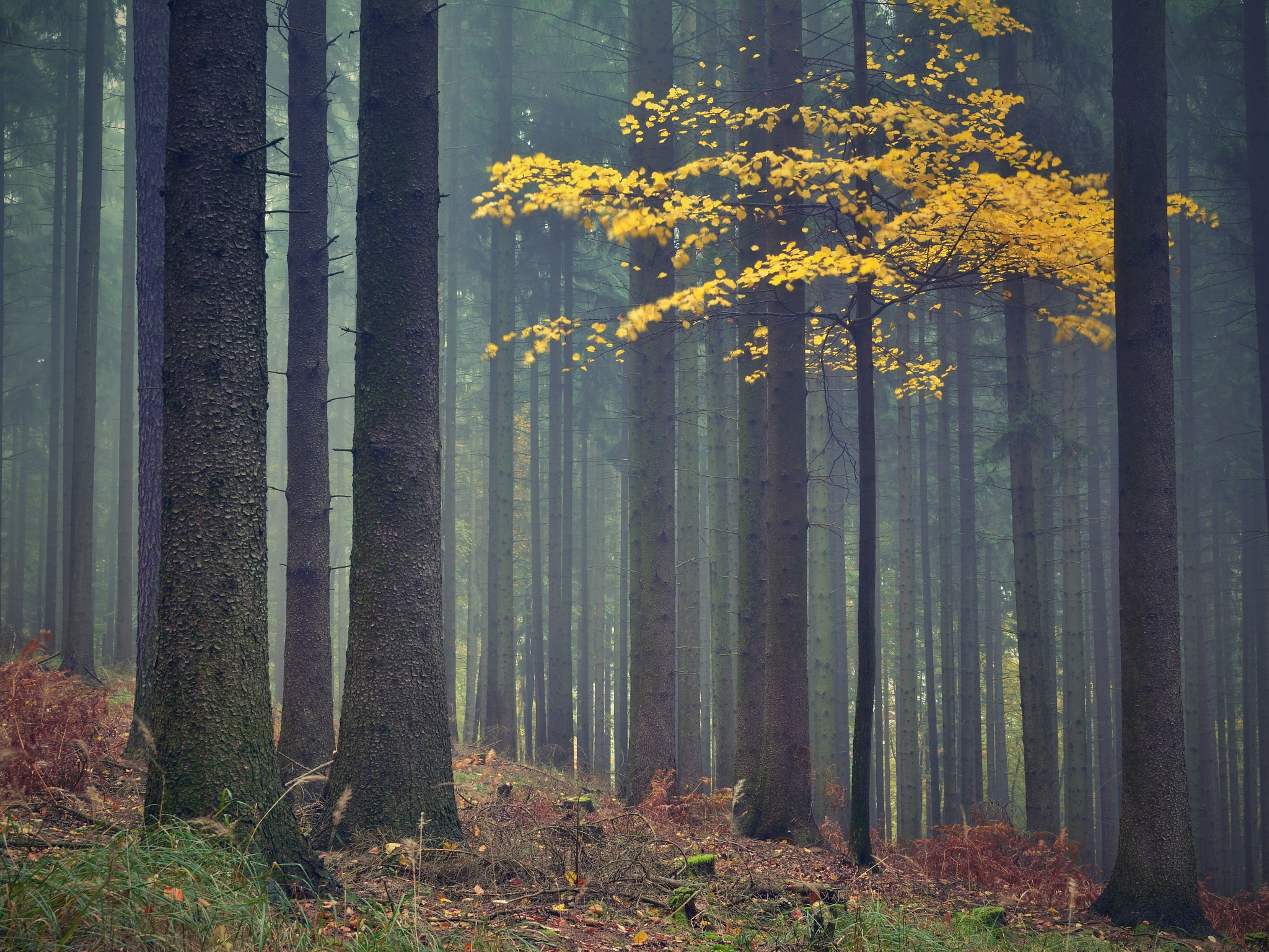 Autumn forest by robertjanda12