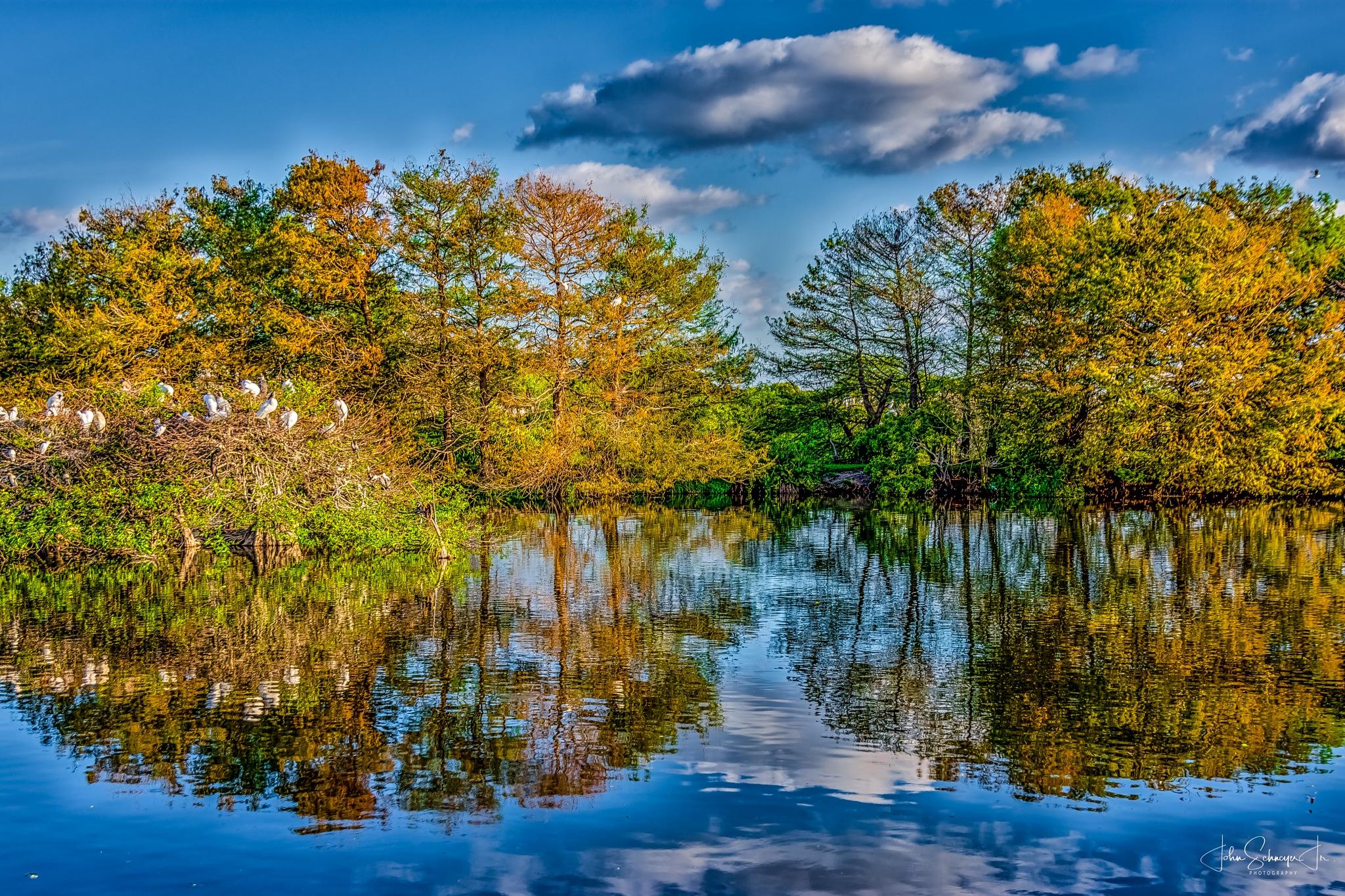 Wetlands Reflections by John Schneyer