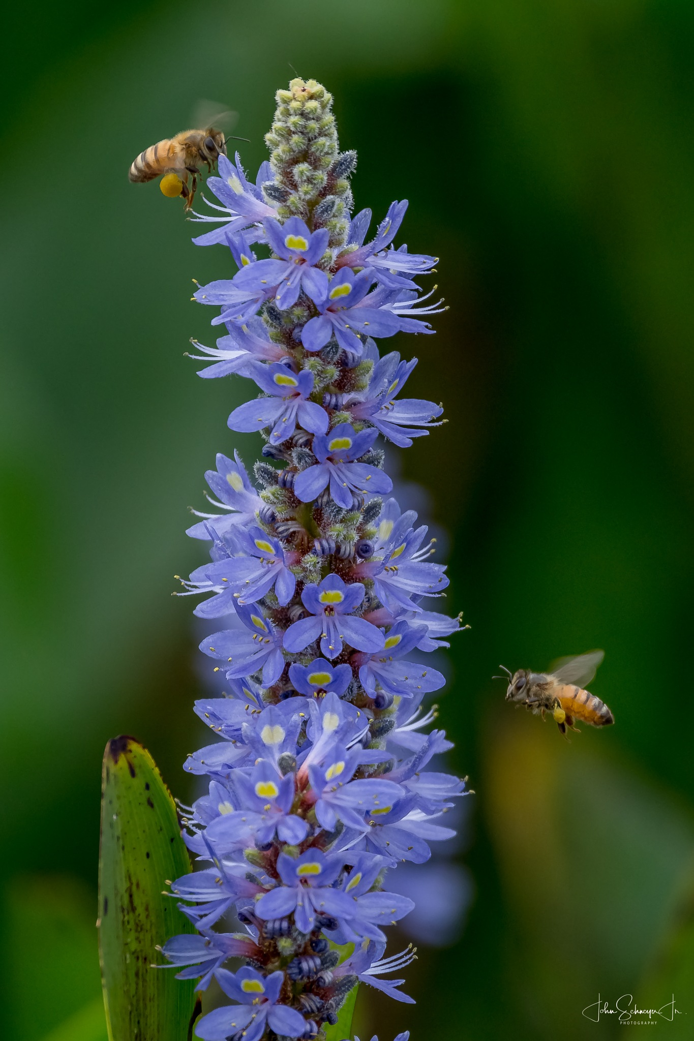 Buzzing Around by John Schneyer