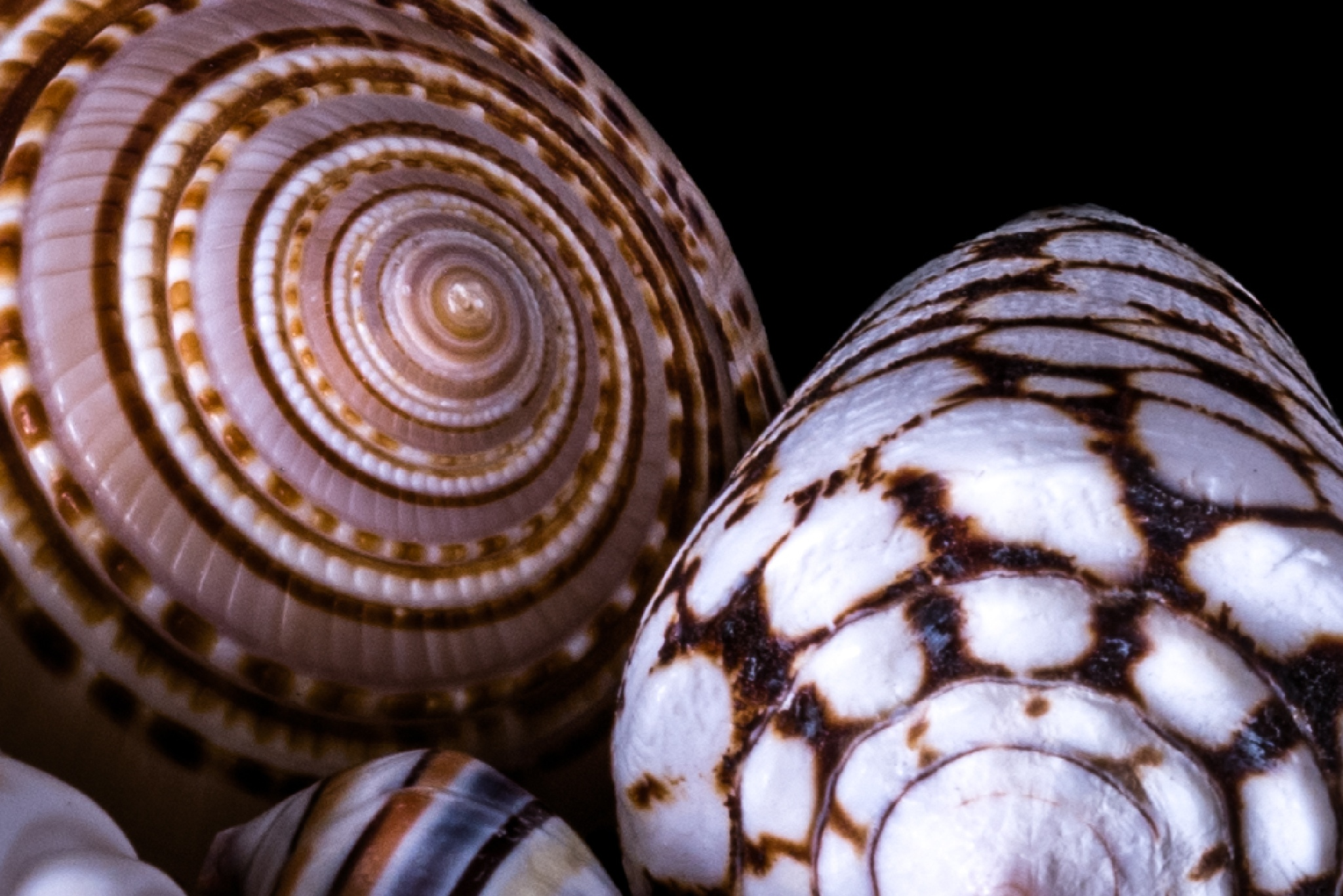 TIght on the Shells by John Schneyer