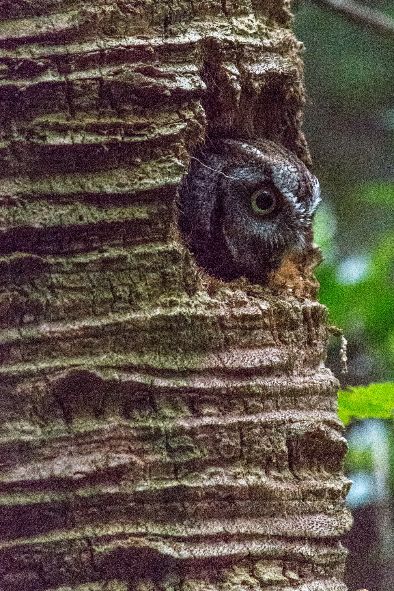 Mama Owl by John Schneyer