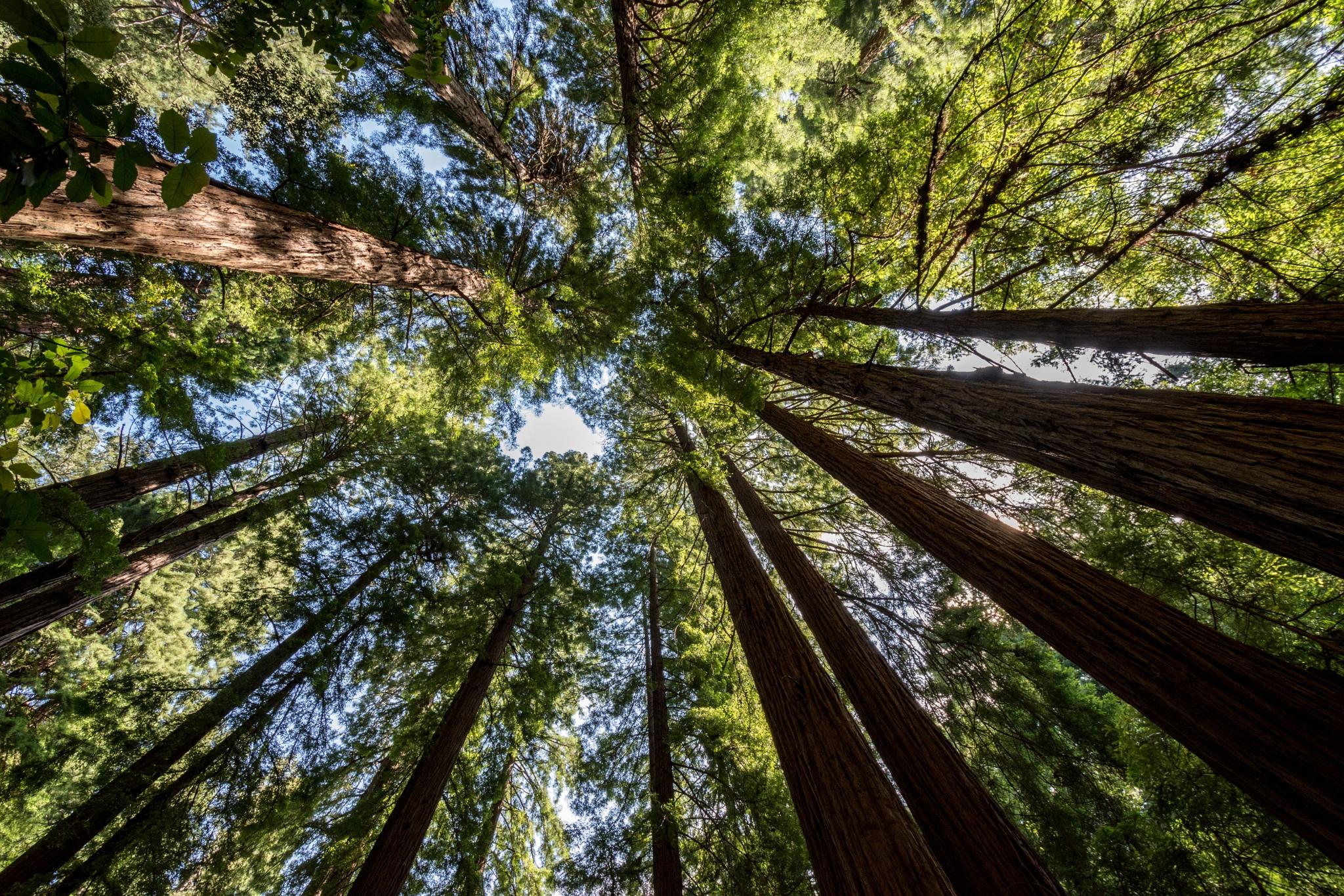 Treescape by John Schneyer