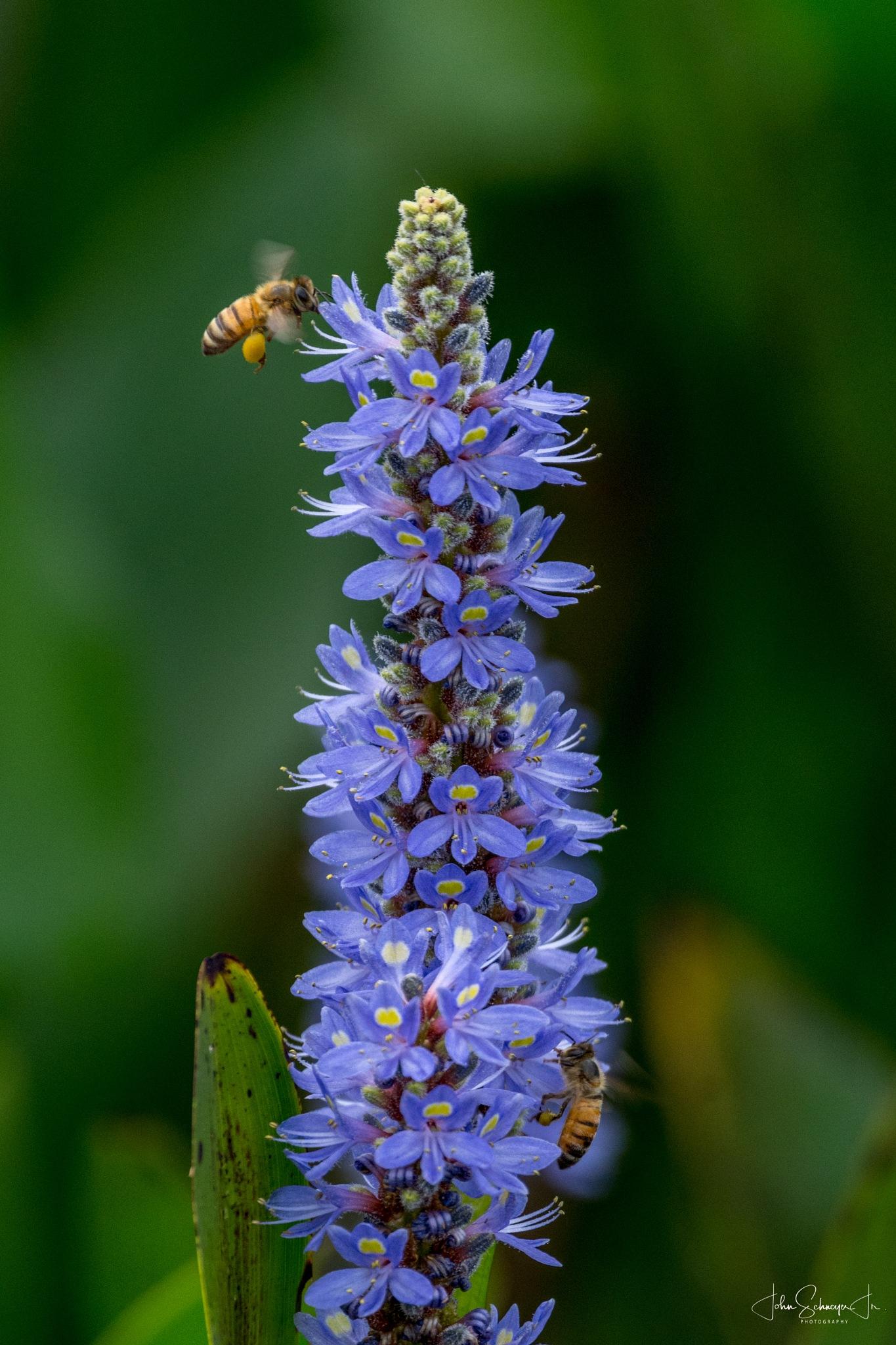 Pollination by John Schneyer