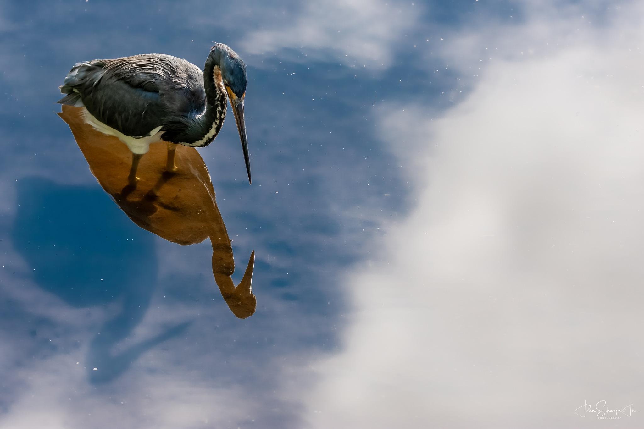 Triple Image Heron by John Schneyer