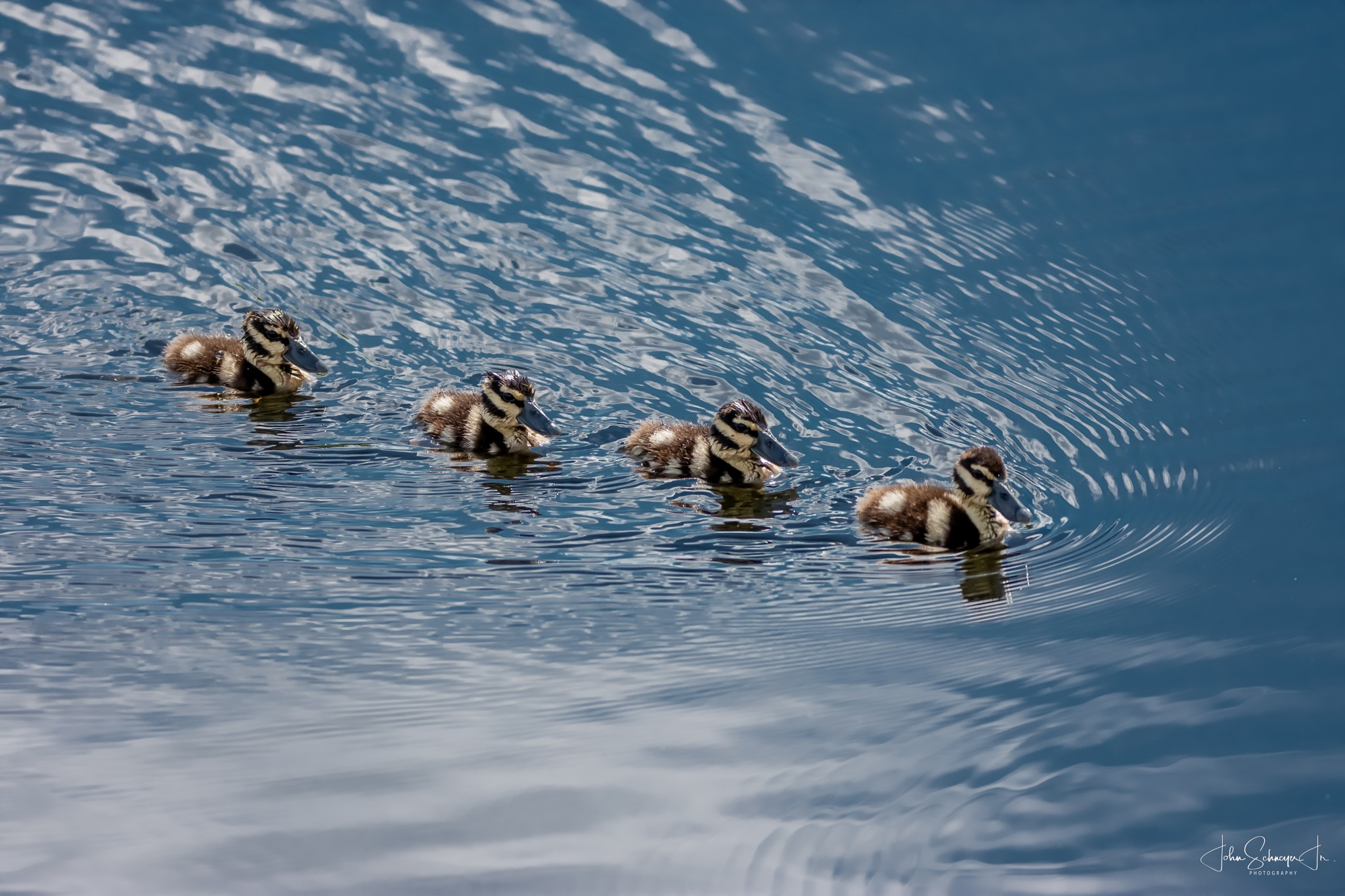 Get Your Ducks in a Row by John Schneyer