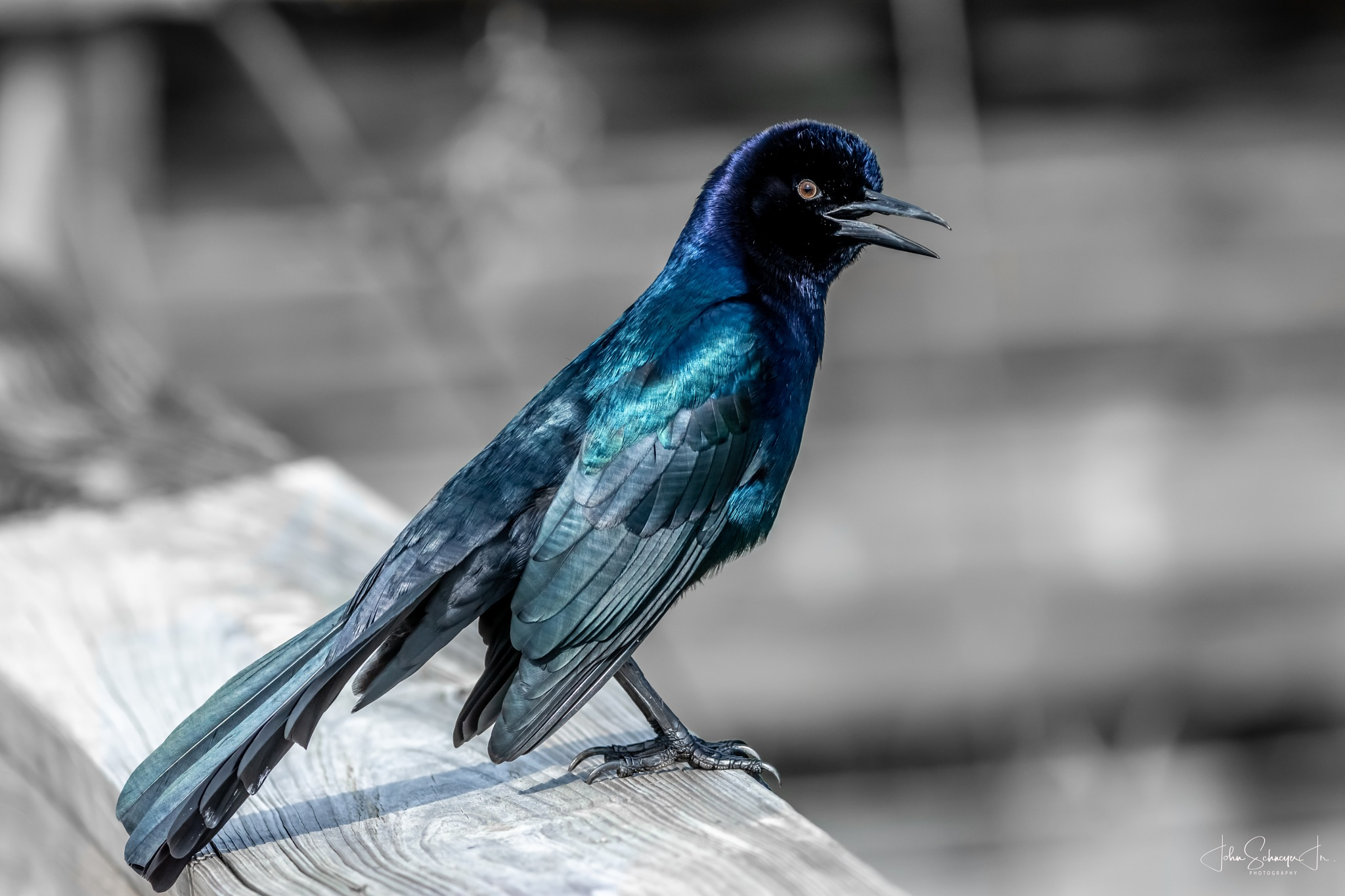 Blue Bird on the Watch by John Schneyer