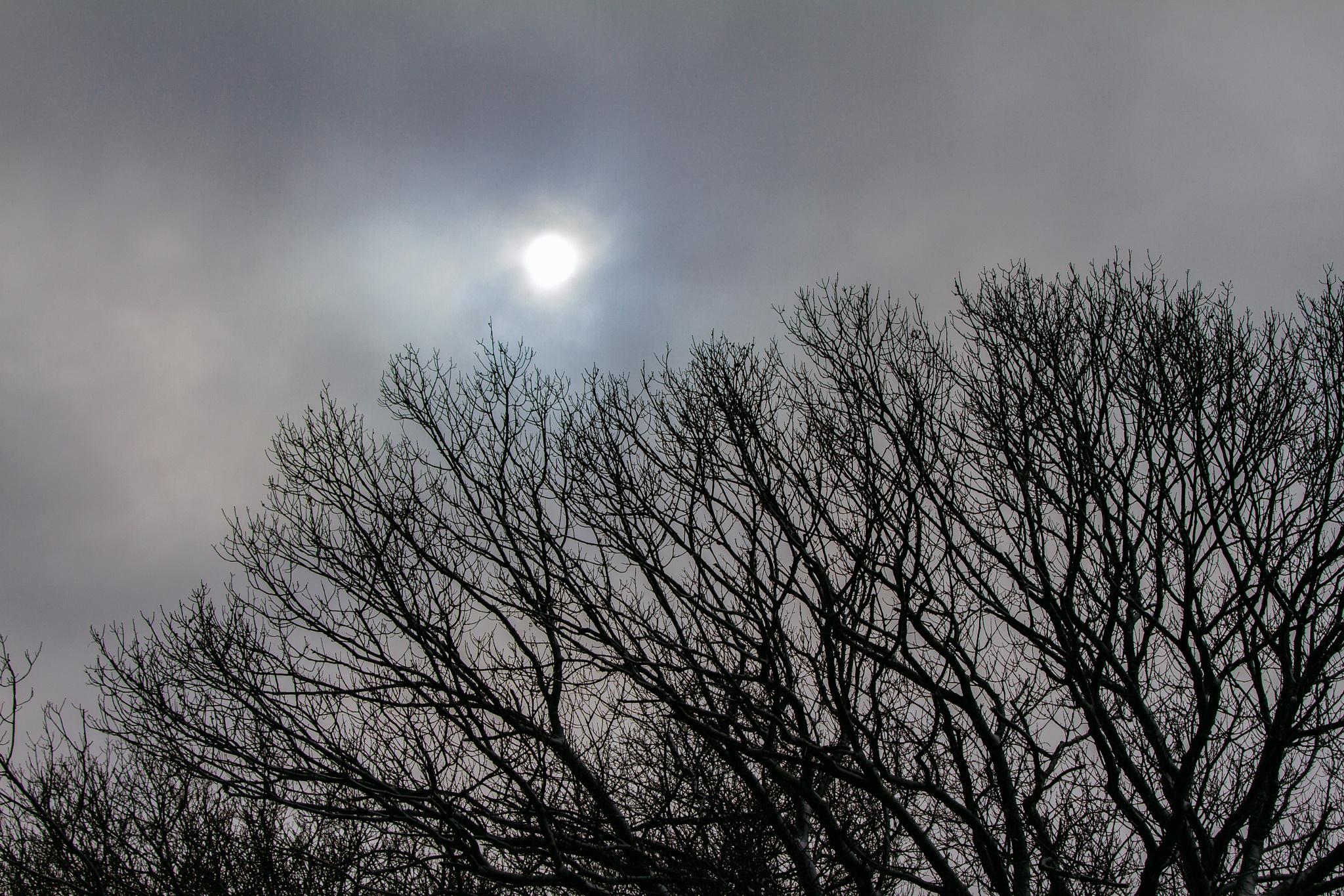 Winter Sky by Kay A. Ficht