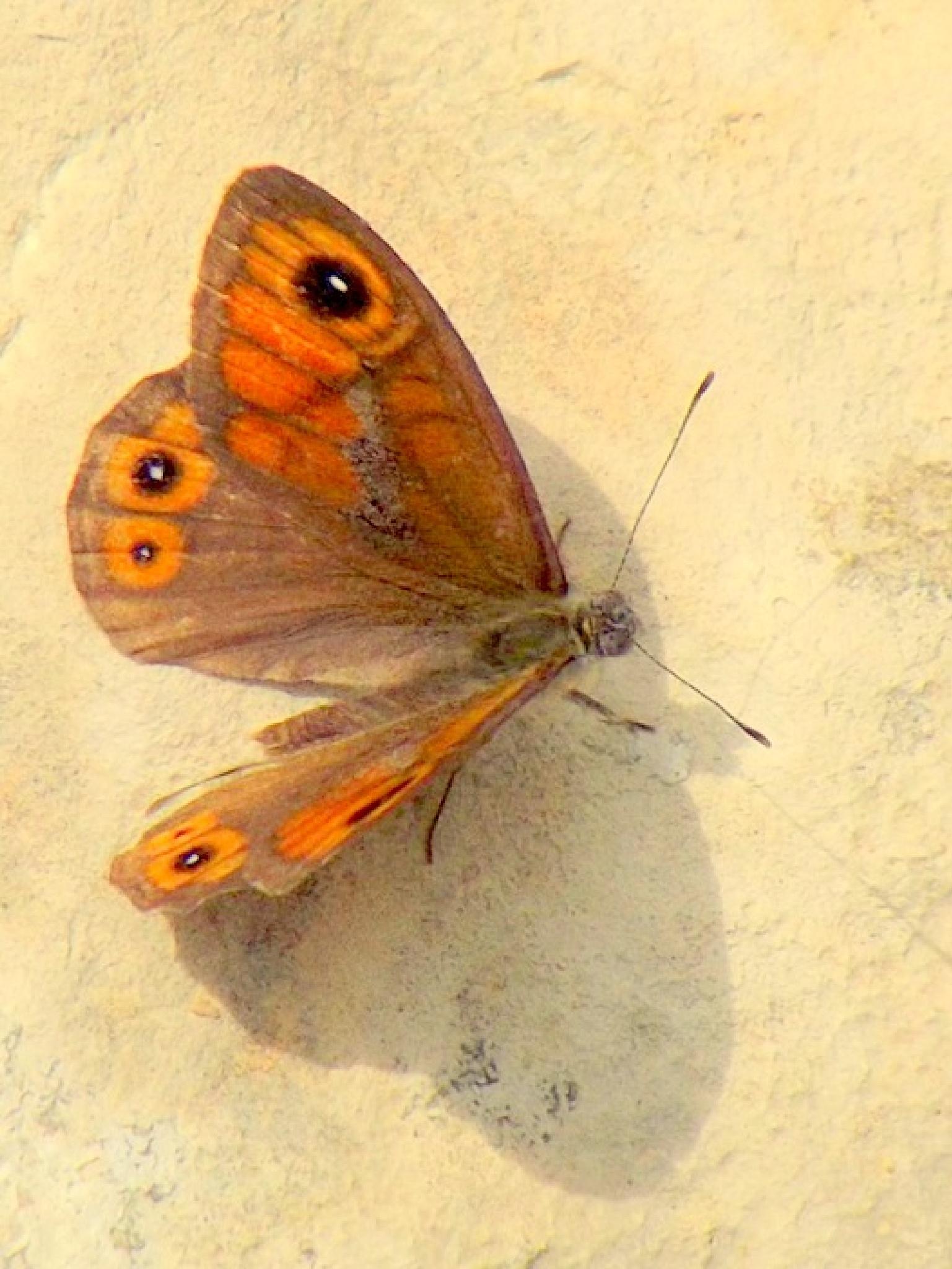 Butterfly by Alp Emirhan Küpeli