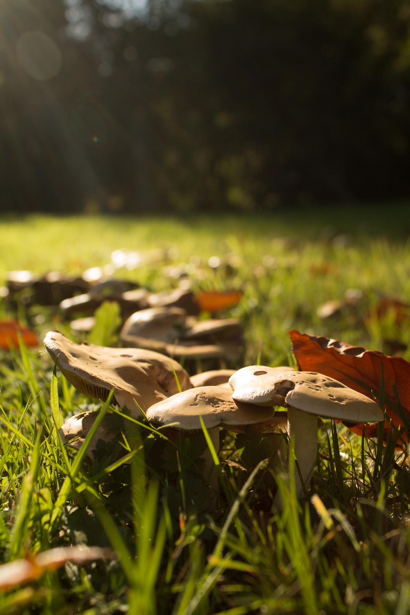 Mushrooms Soaking Up The Sun by Steven Ritchie