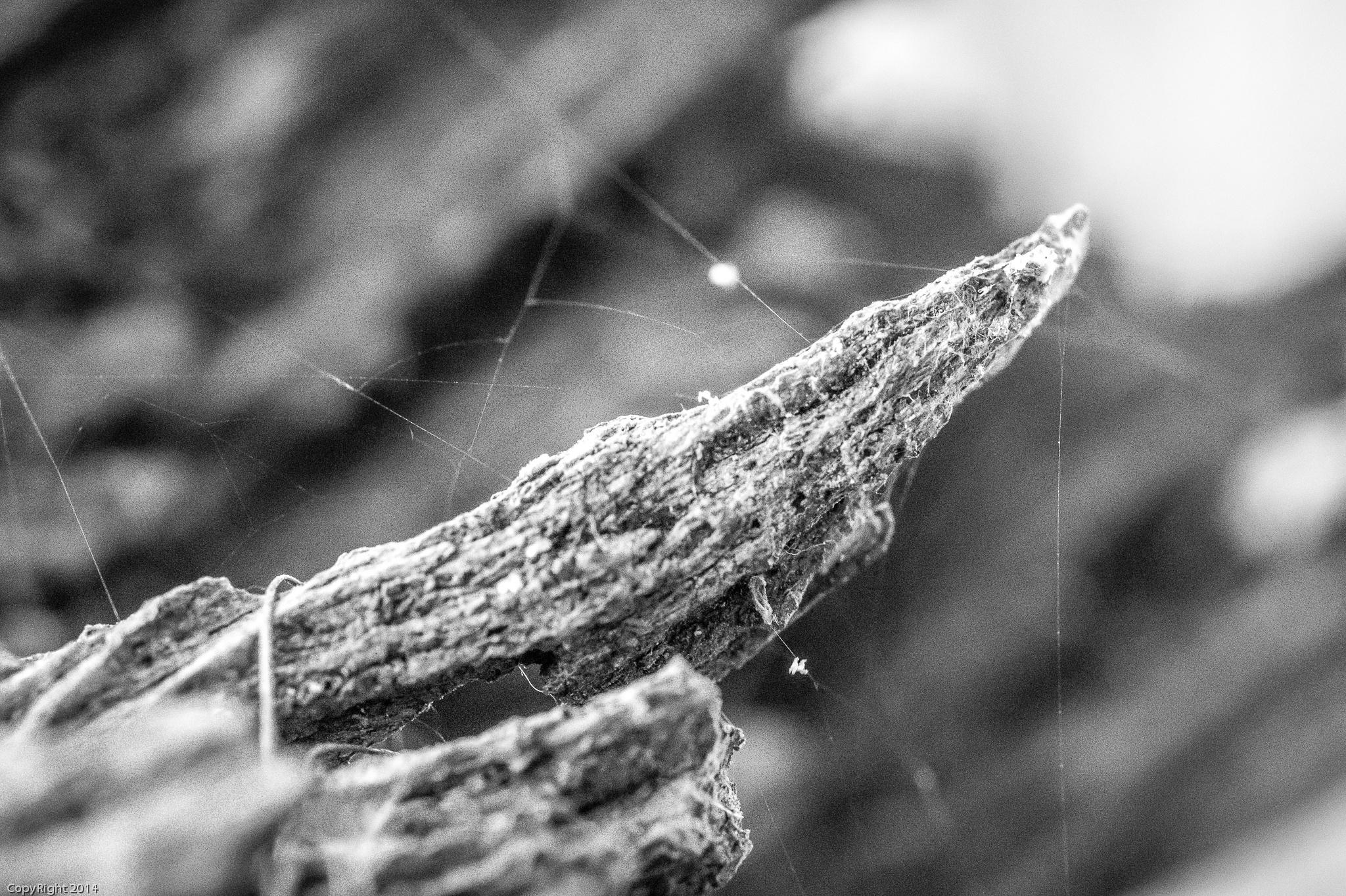 Webwood by Ric Aldrich