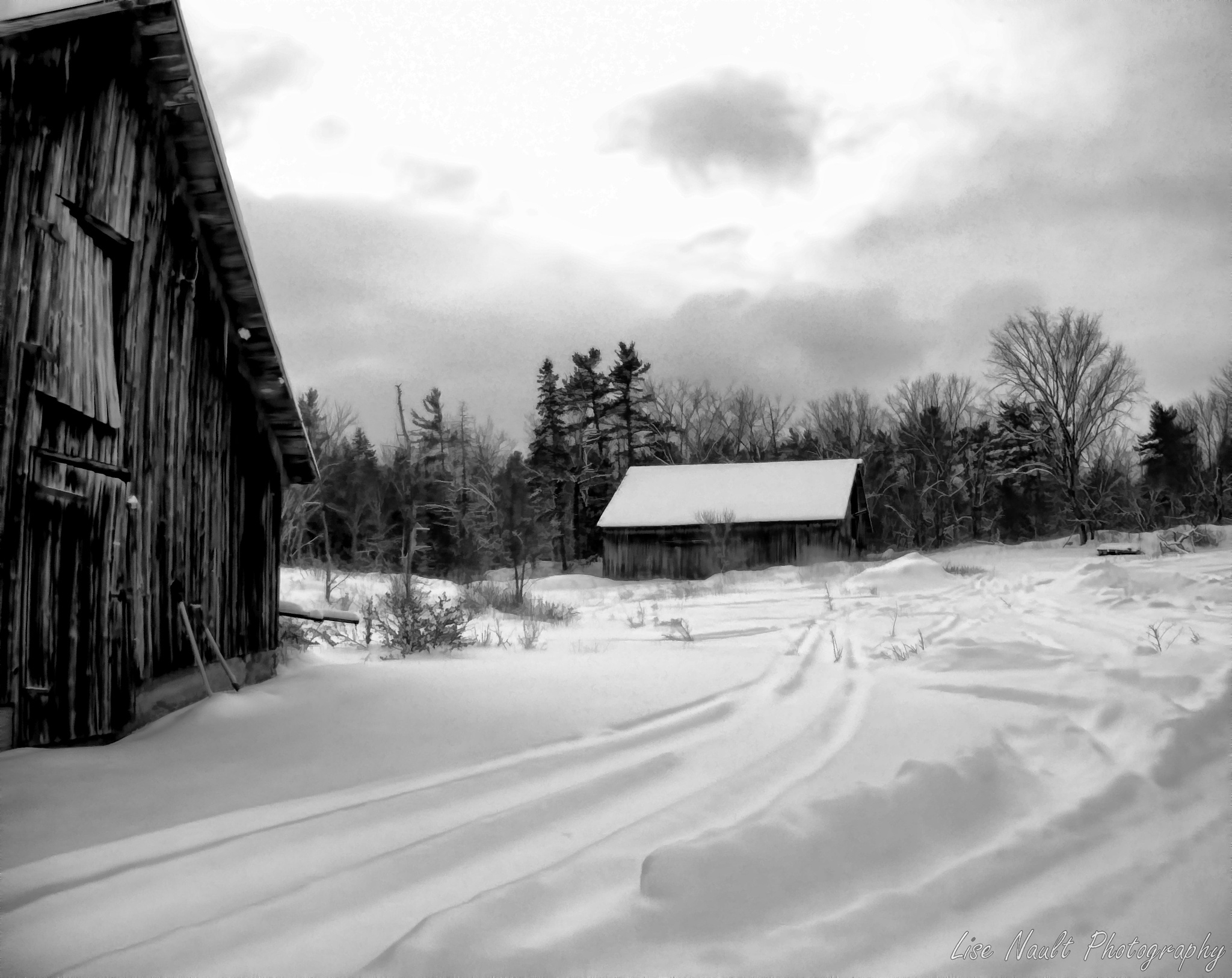 Winter in Black and White by Lise Nault
