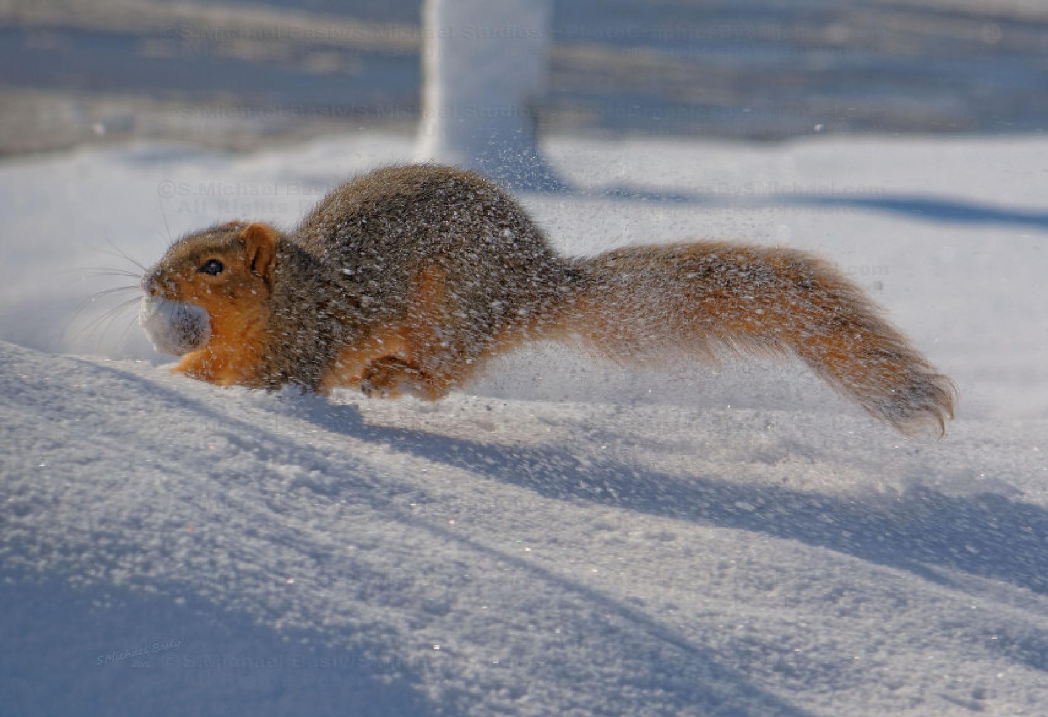 Dashing Through The Snow by sbasly