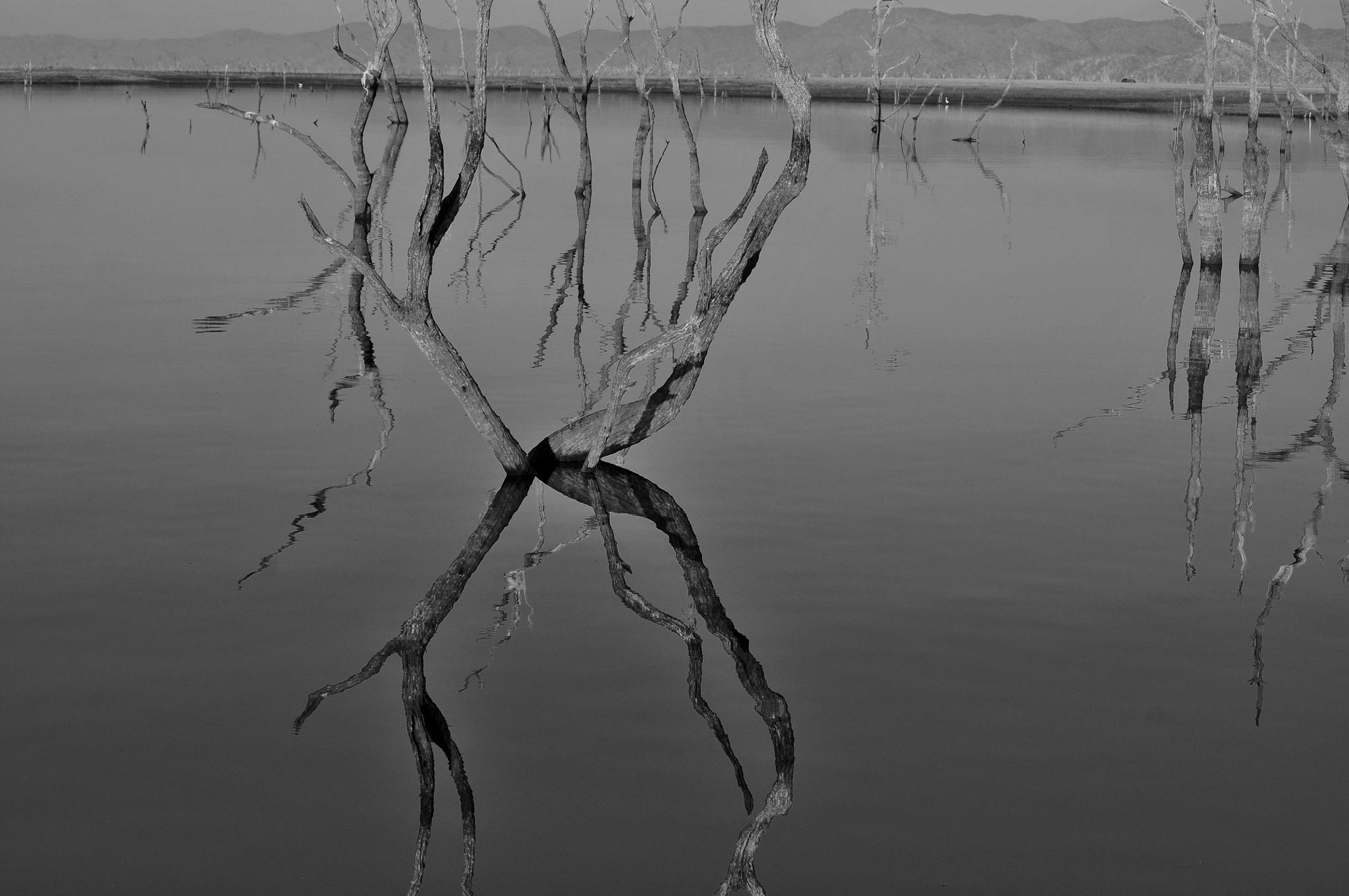 Sunken trees, Lake Kariba by Ian Harvey-Brown
