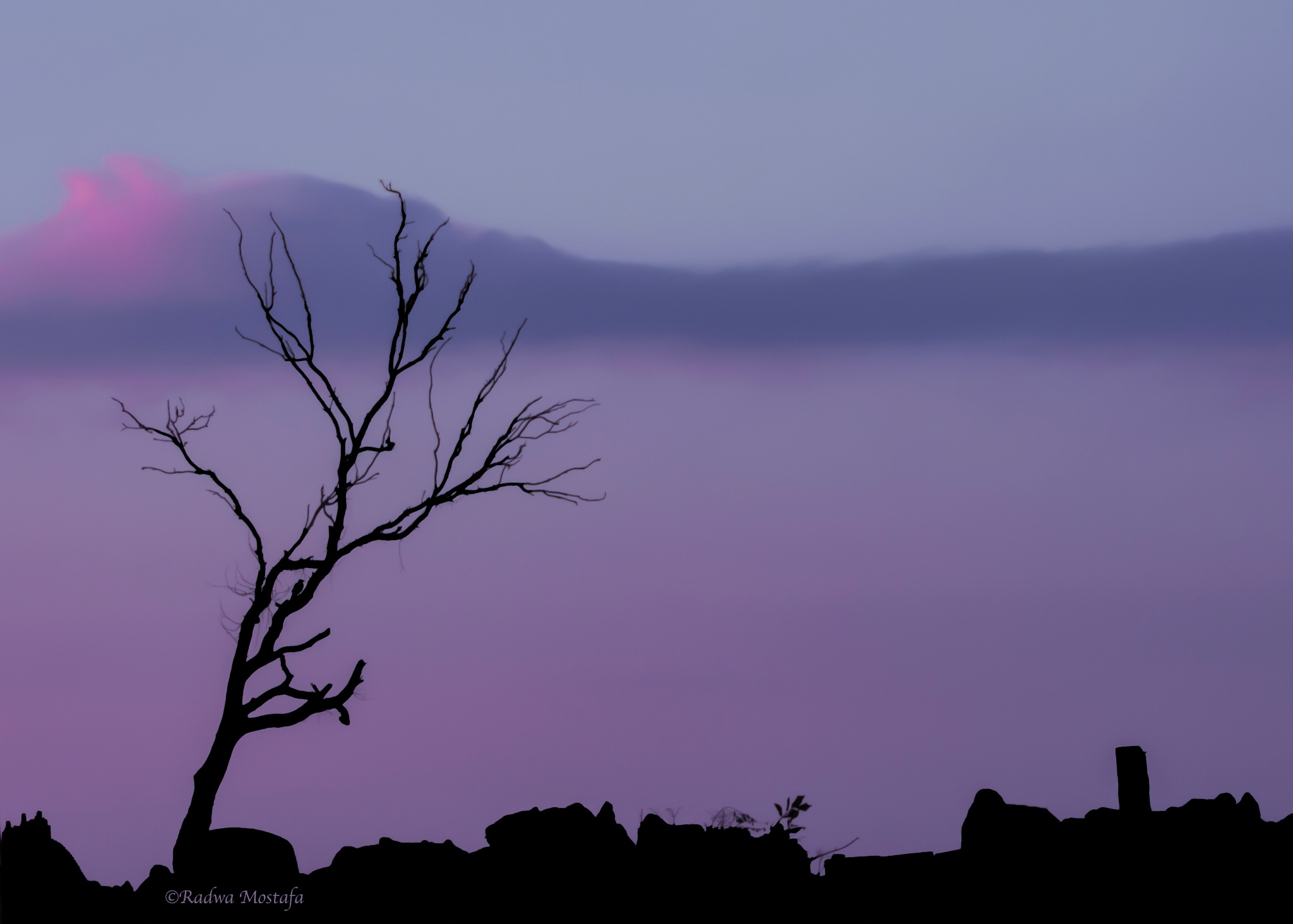 Lonely at dawn on a lonely tree by RadwaMostafa