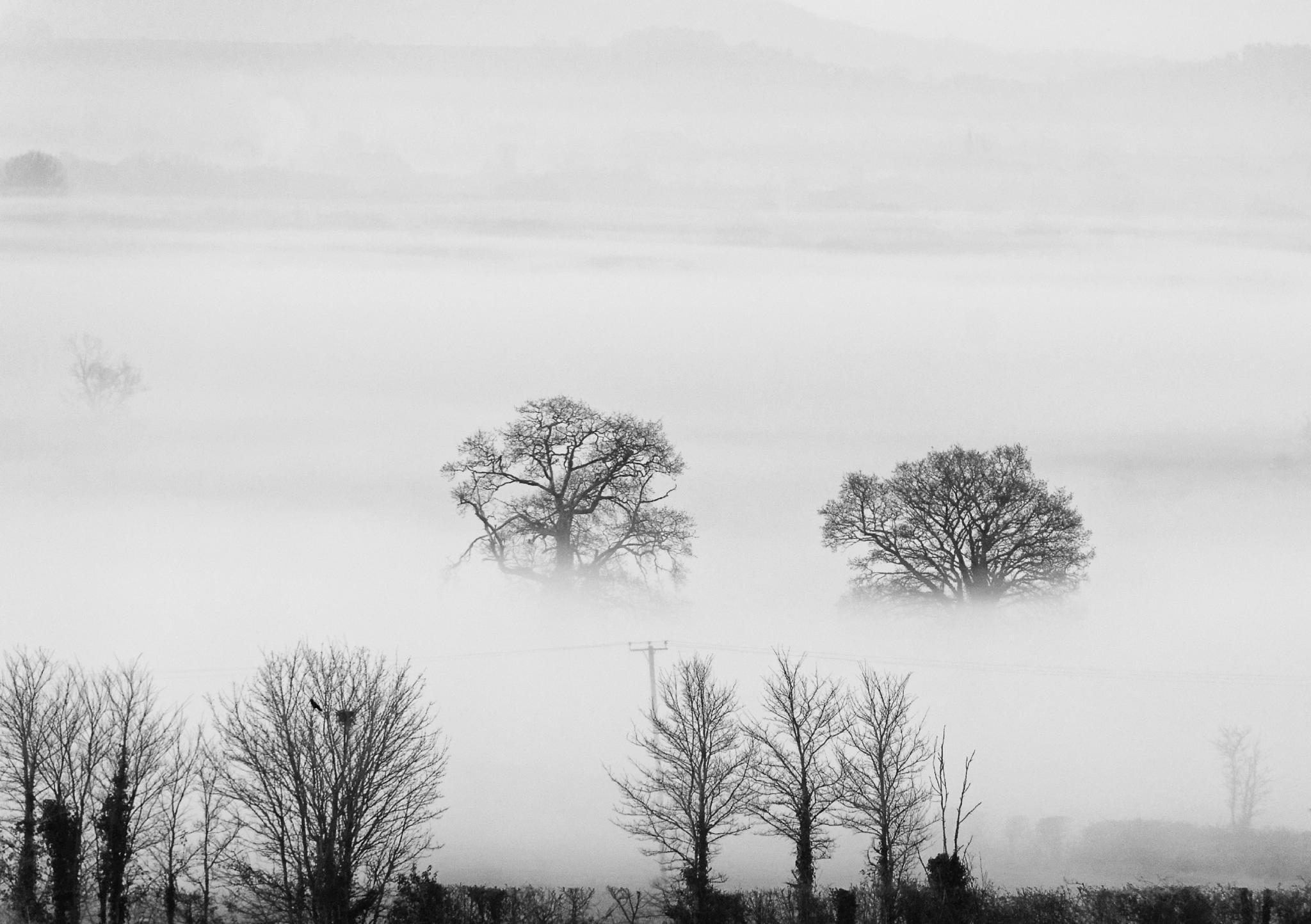 Somerset Levels - Misty Morning by GeraldGraves