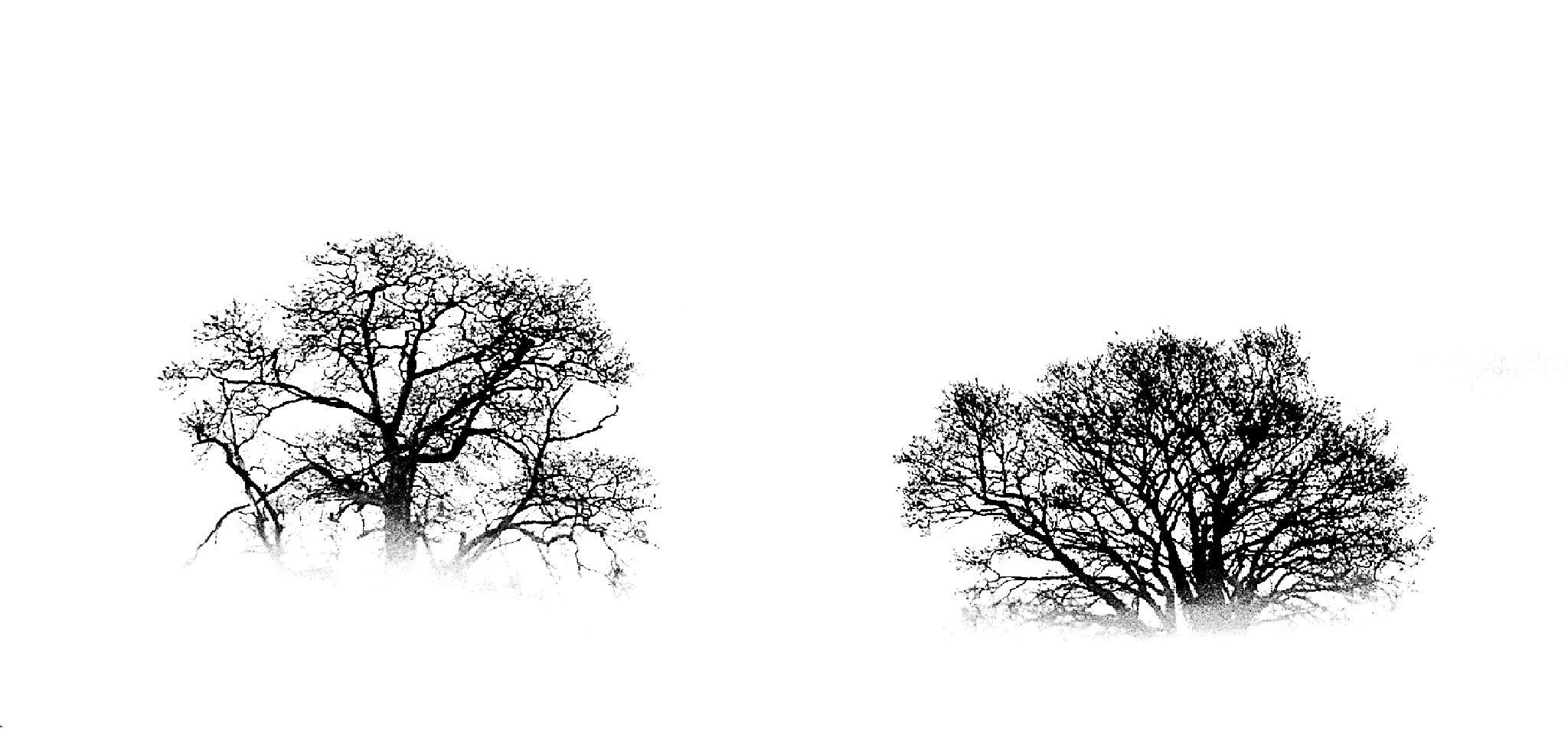 Trees by GeraldGraves