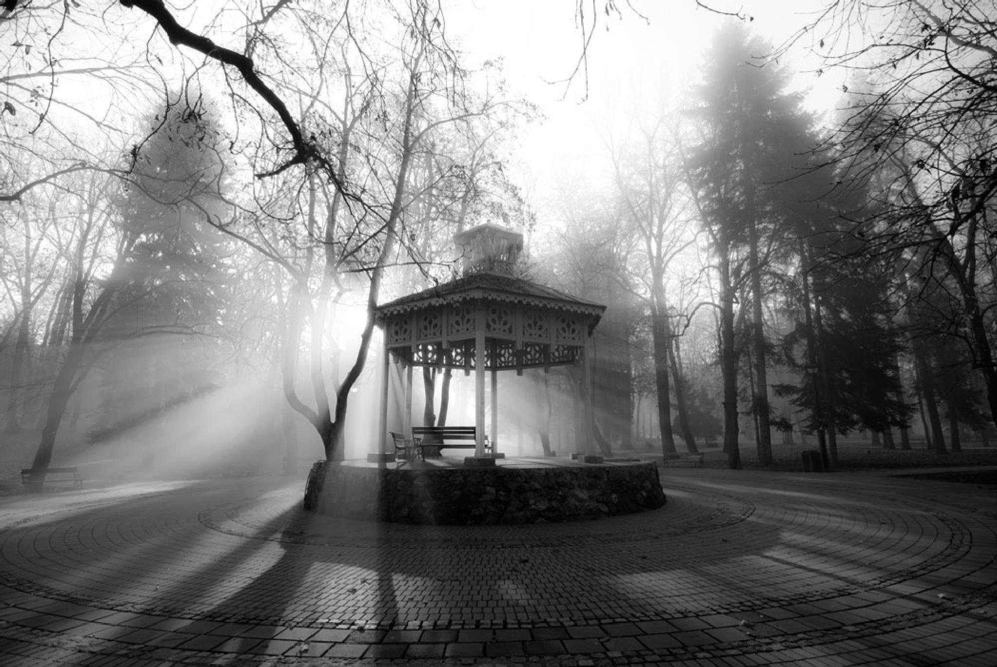 Morning by Djordje Petrovic