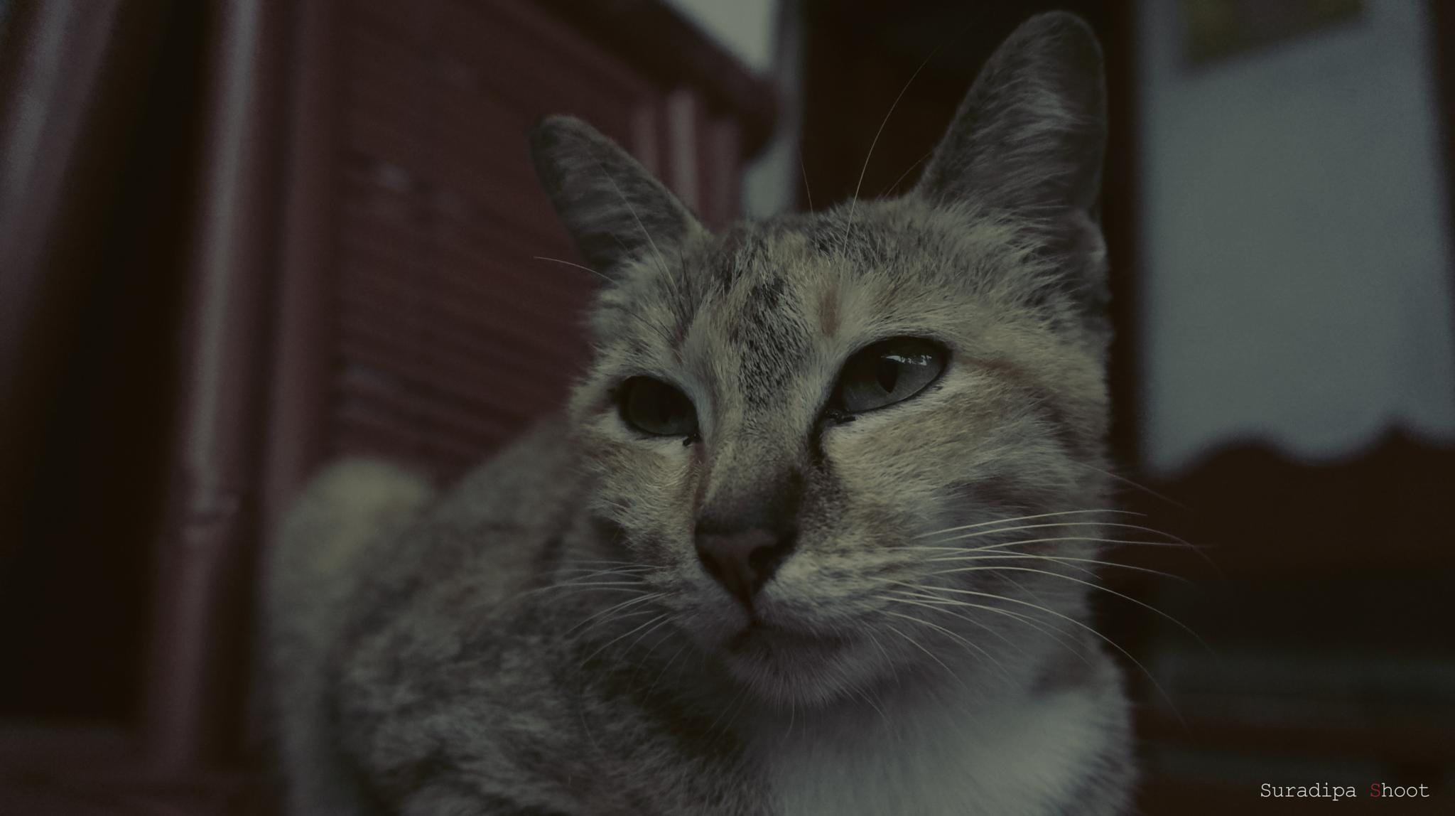 cat by Dipa Lombok