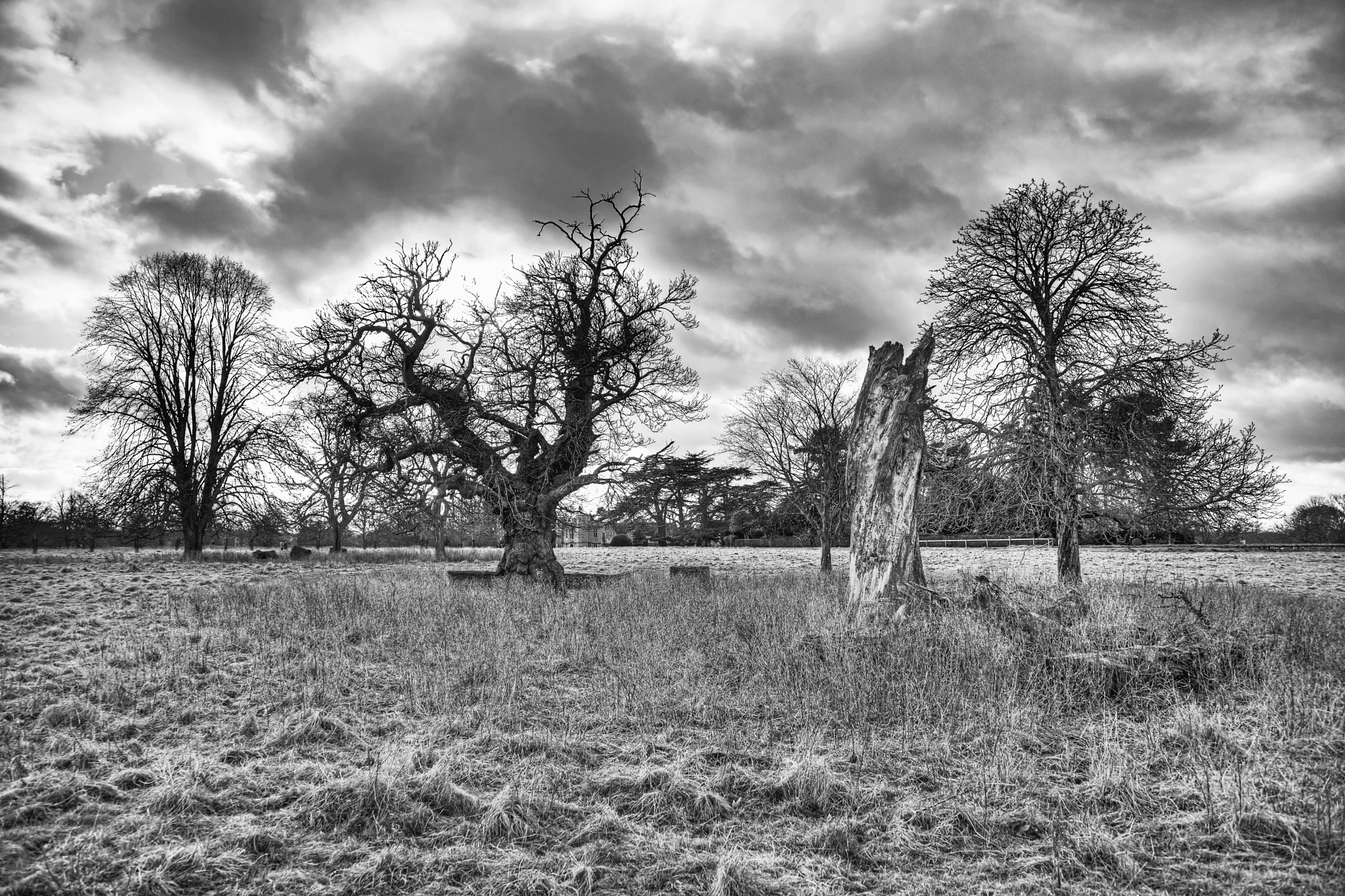 Broken Tree by sparrow1234