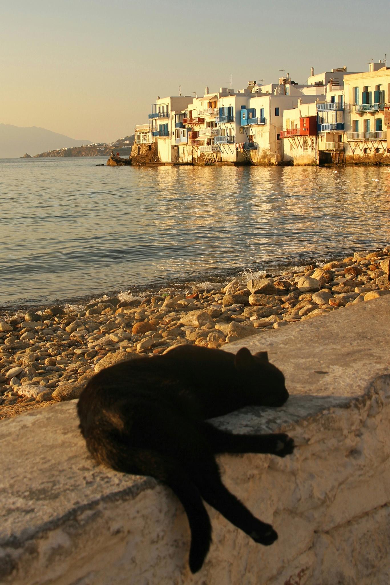 Cat - Little Venise - Mykonos by drineguiot
