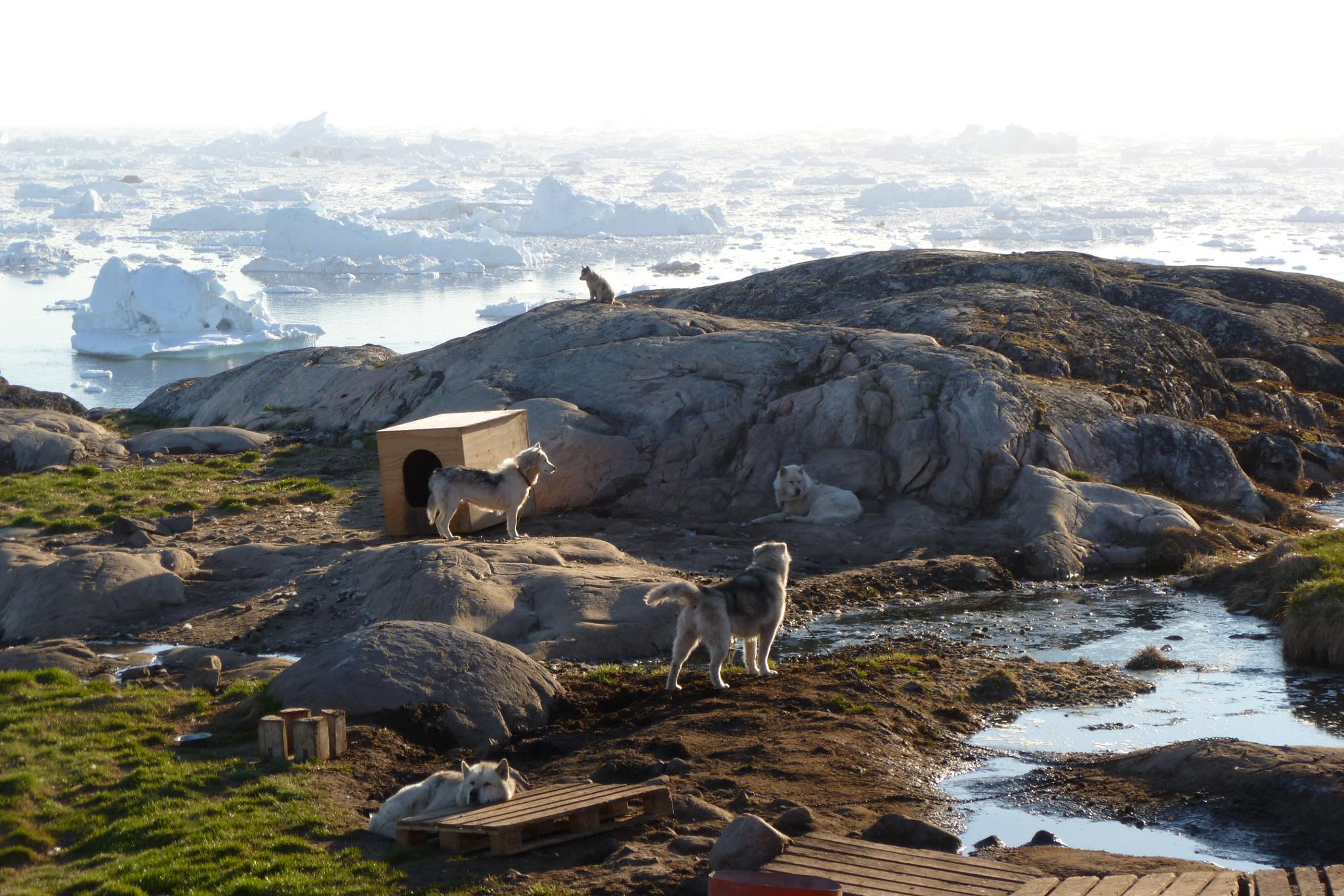 Greenland by lindadevoss