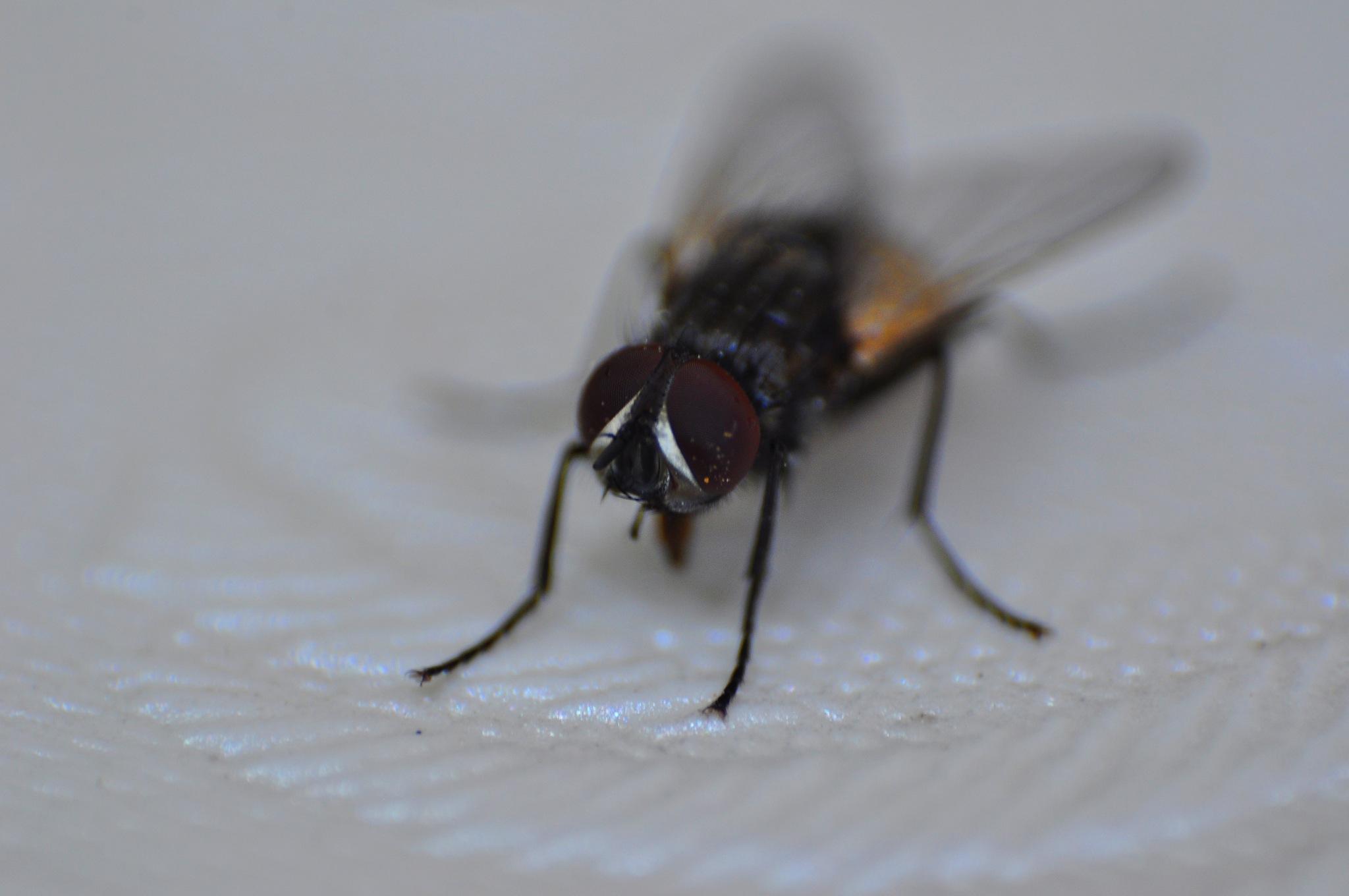 fly by cebaskaya