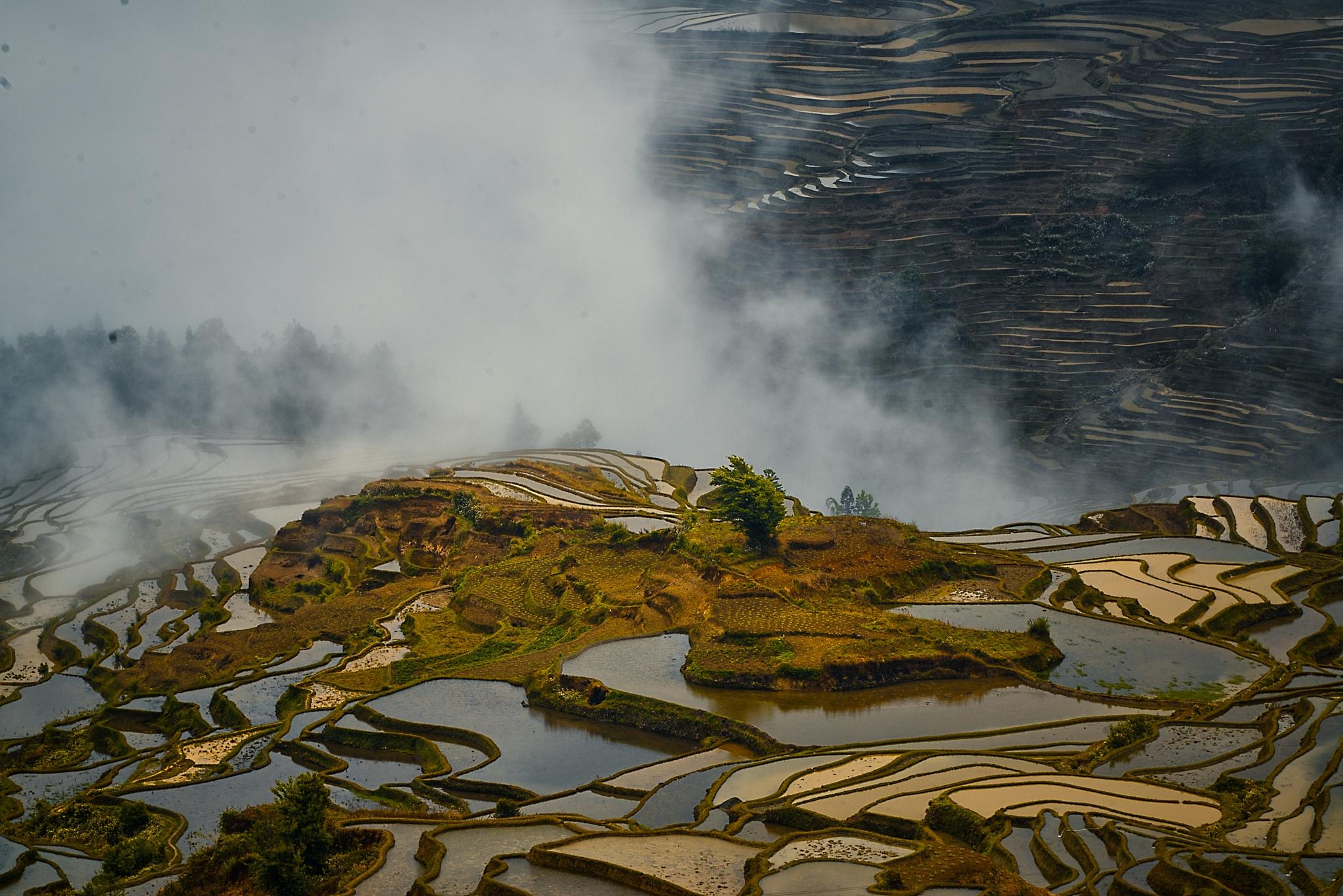Bada rice terrace  by enrico barletta