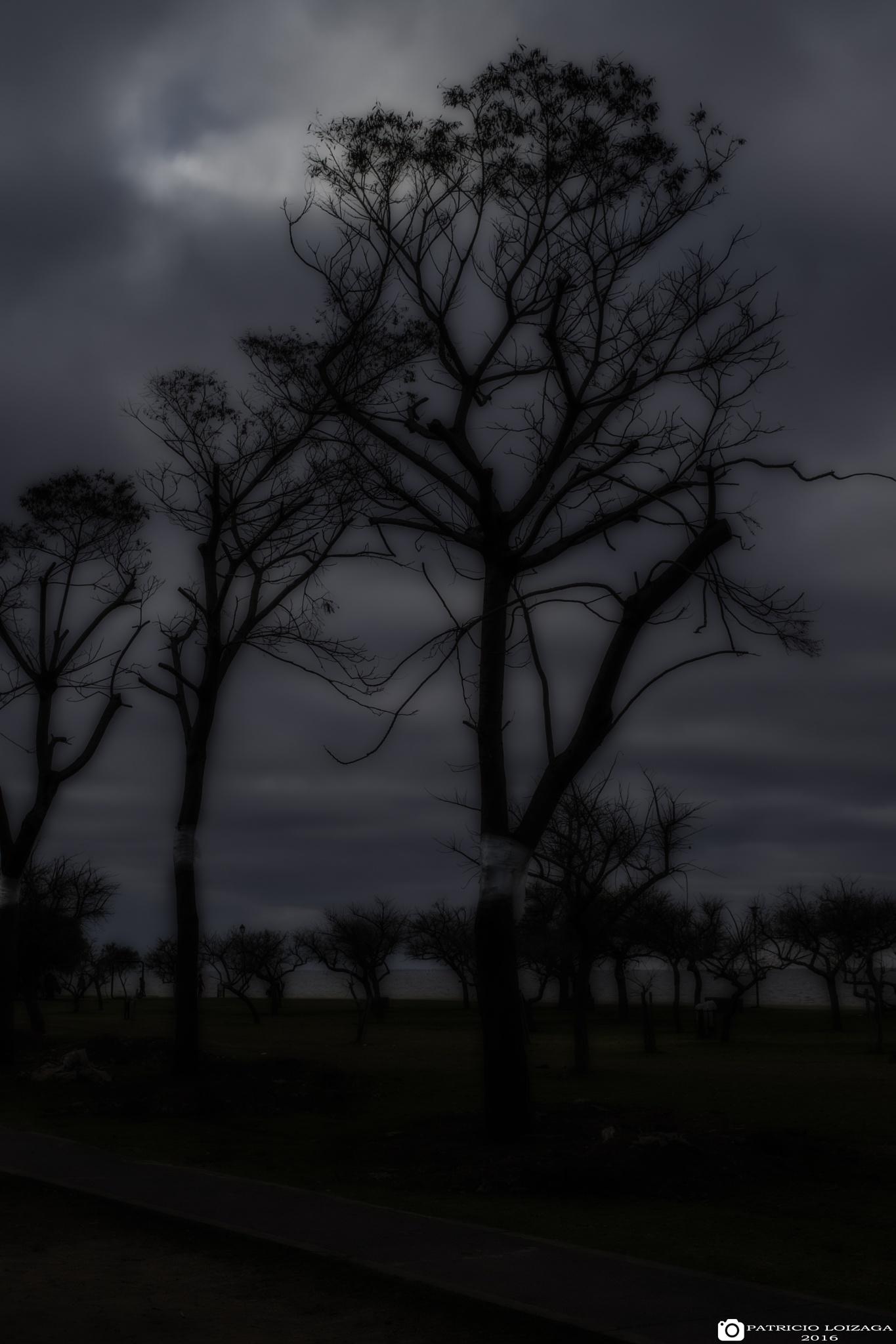 BOO TREE by Patricio Ezequiel Lóizaga