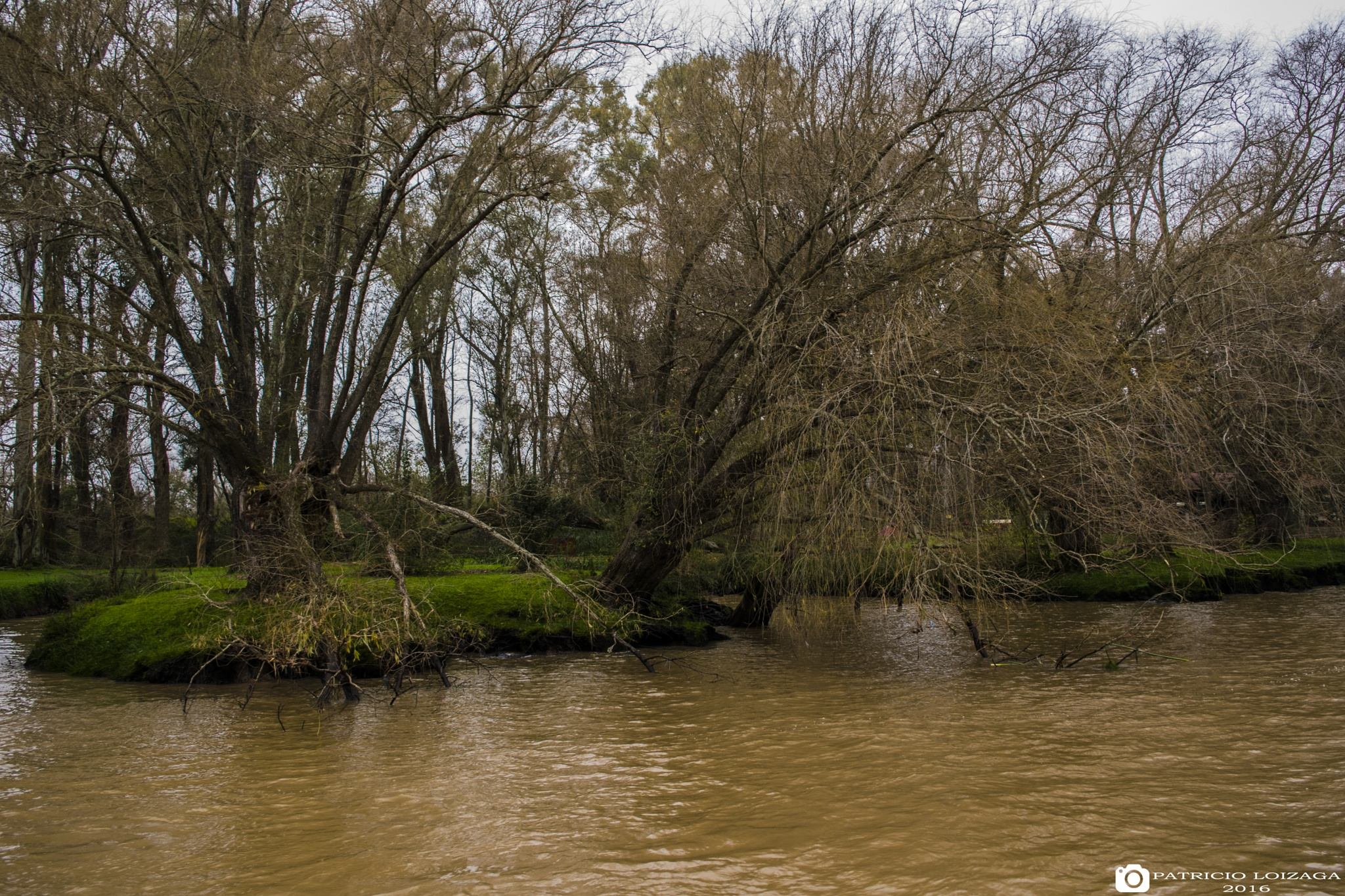 Trees over the Tigre River by Patricio Ezequiel Lóizaga