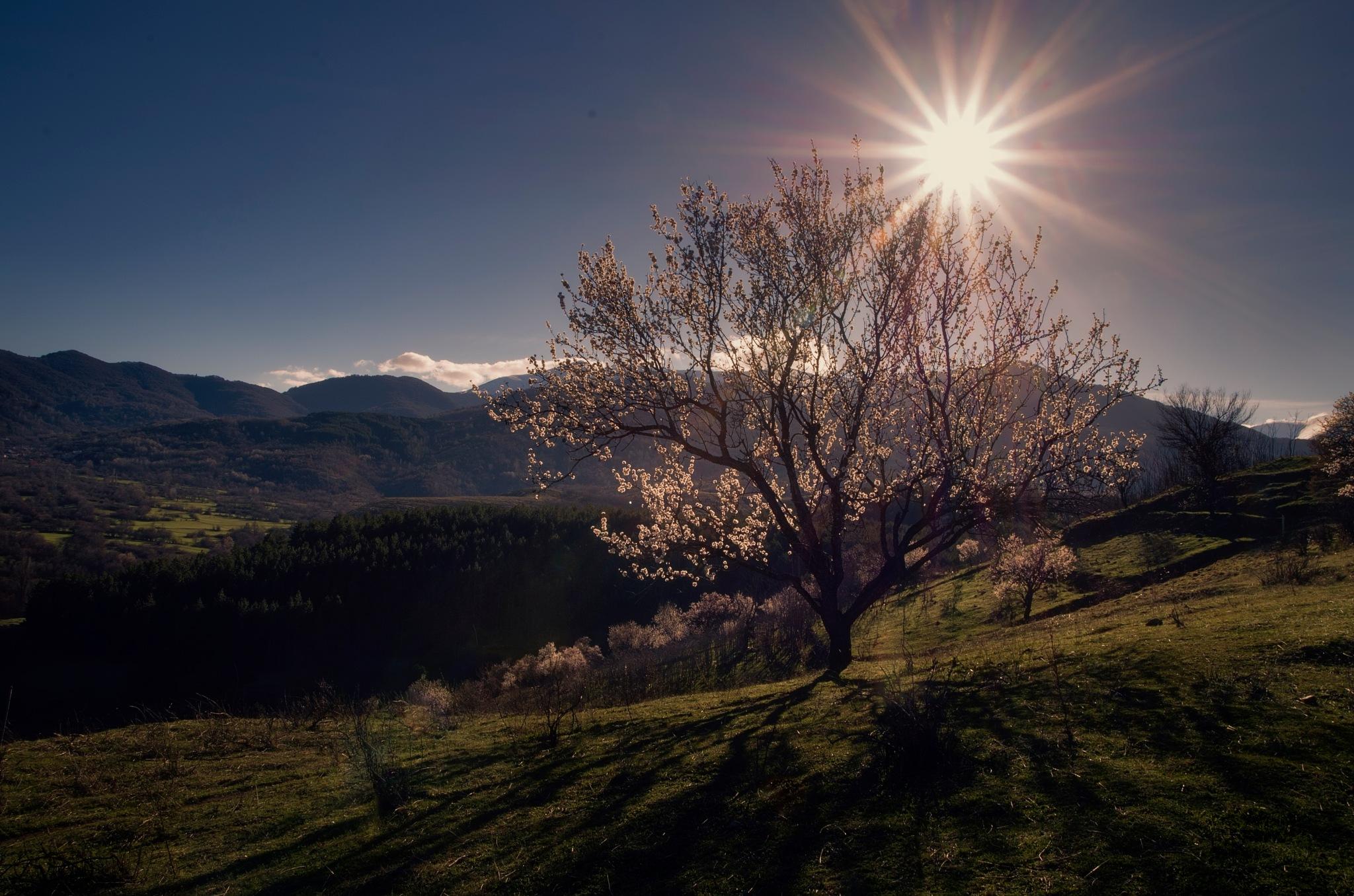 Welcome Spring by PetarBoskovski