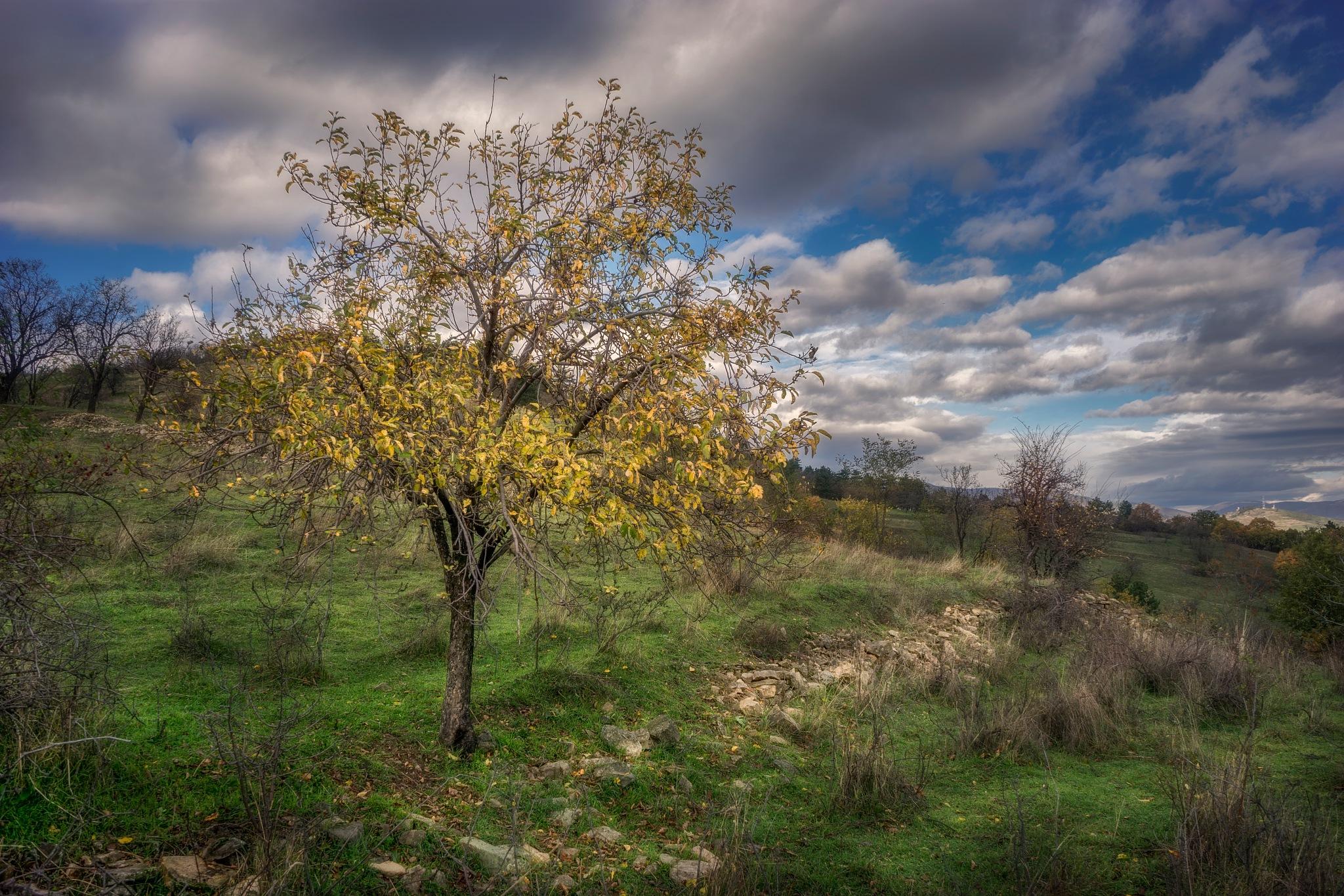 End of autumn by PetarBoskovski