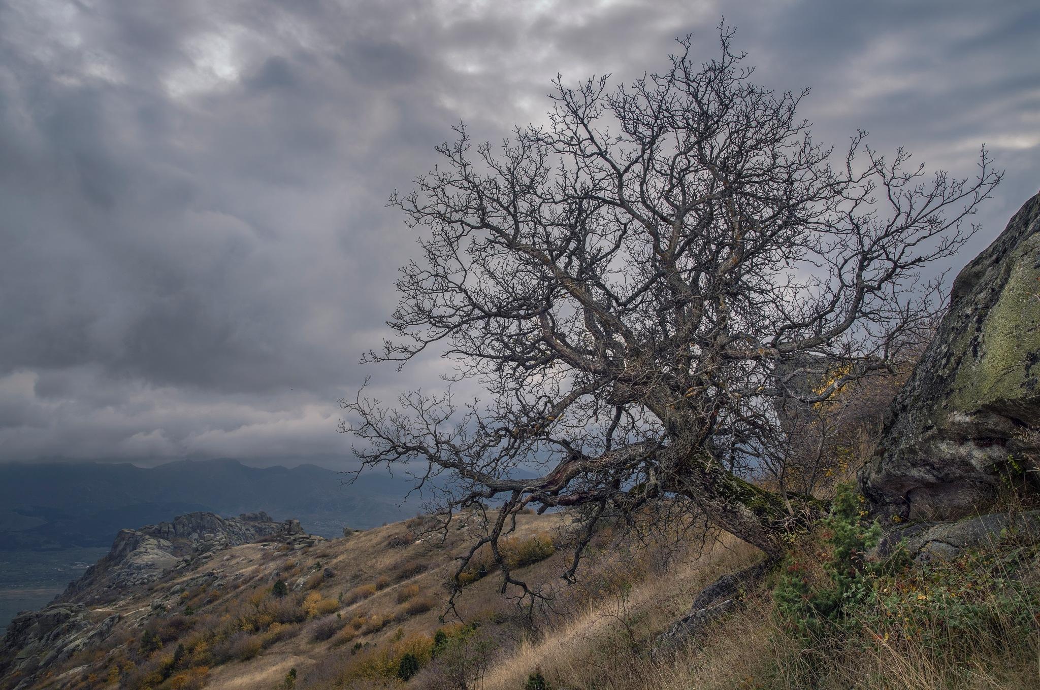 tree by PetarBoskovski