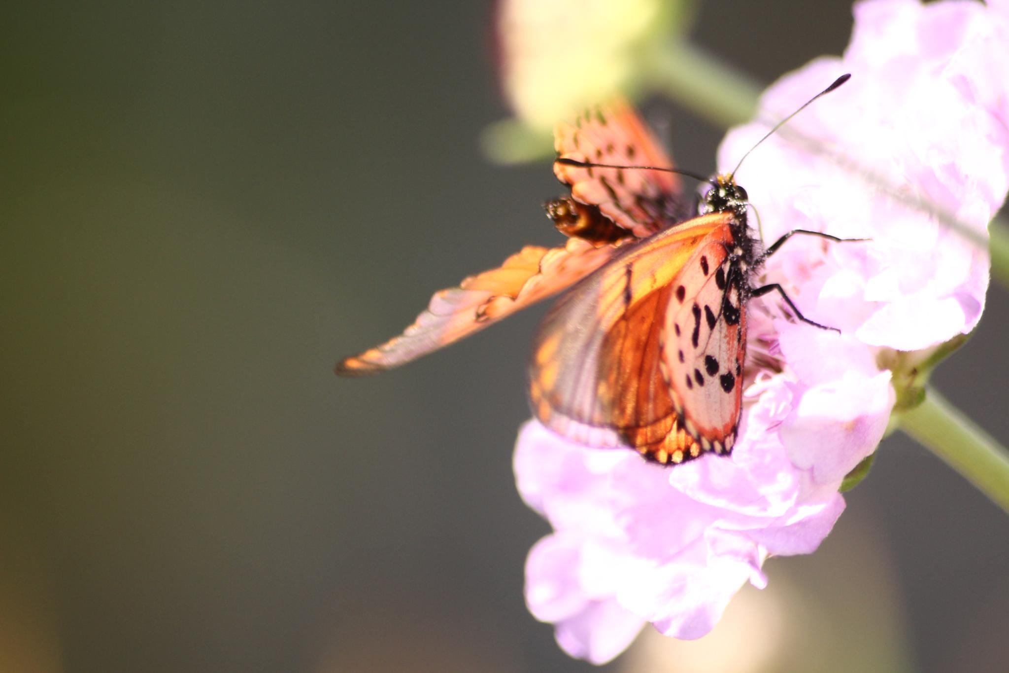 The butterflies by Judithstopforth