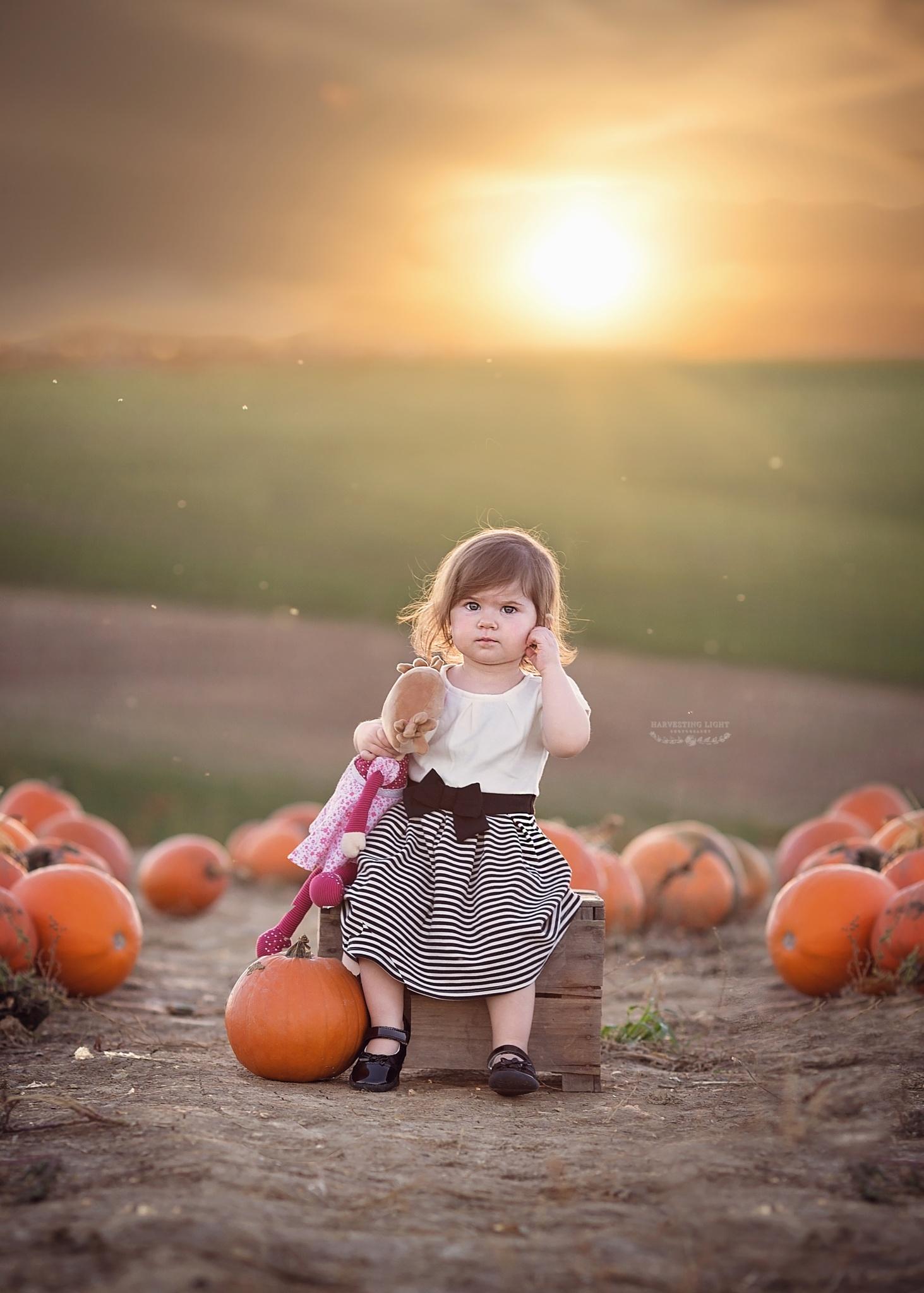 Pumpkin Patch  by HarvestingLight