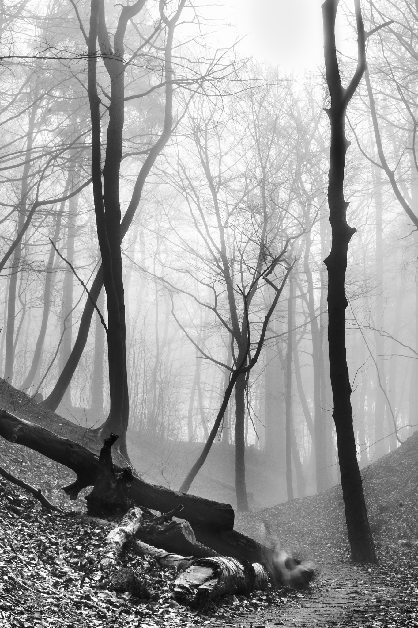 spooky fog by FraBo
