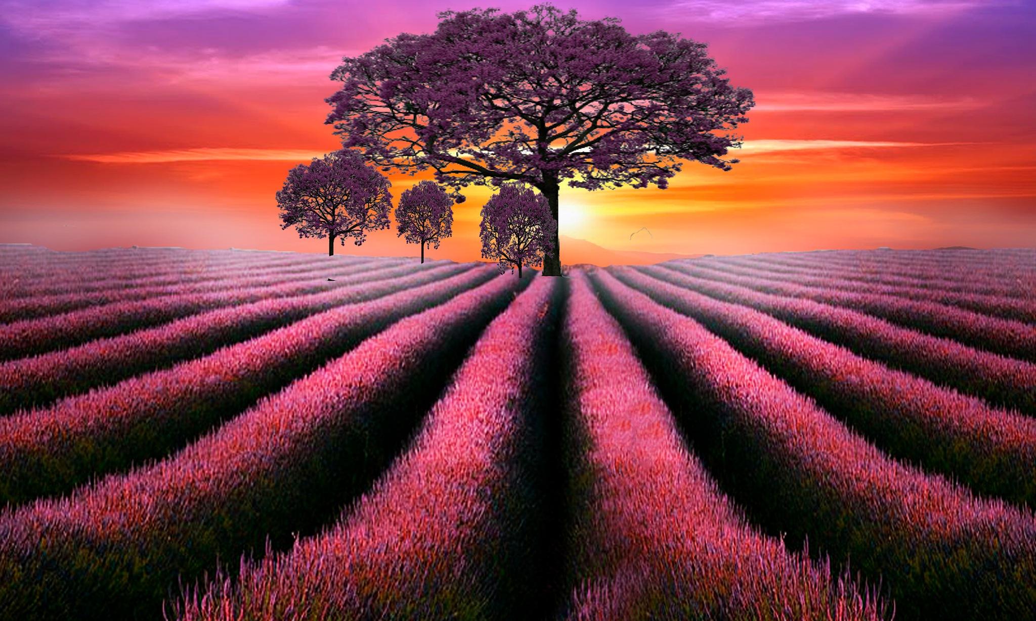 Atardecer rosado... by toalafoto