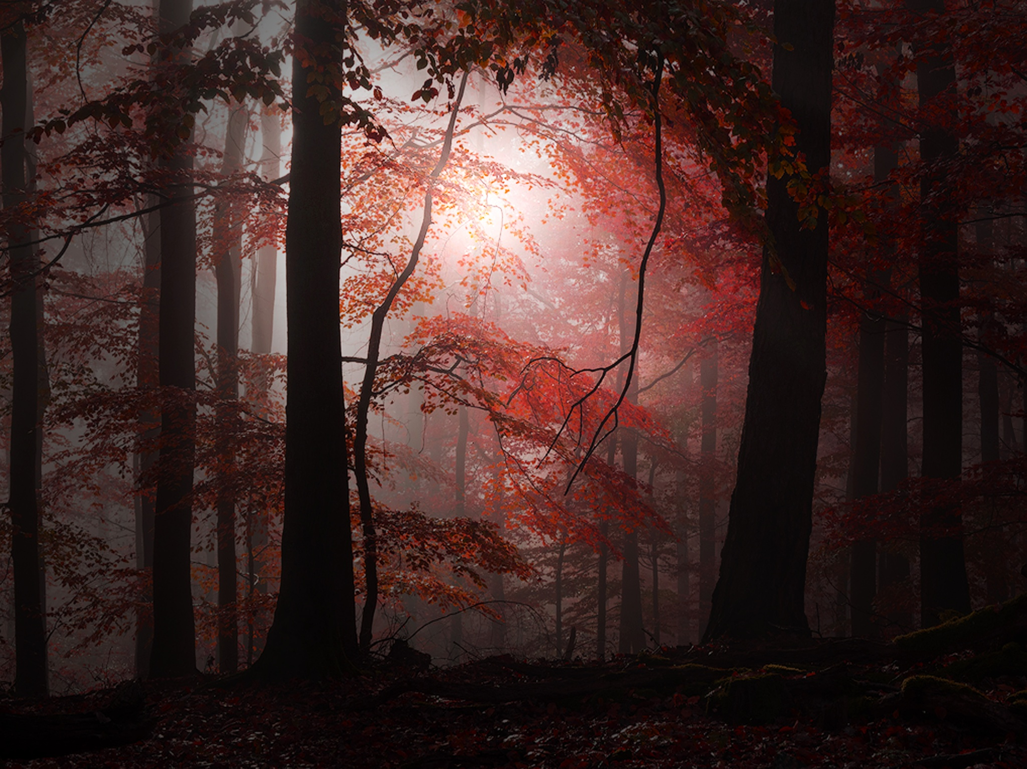 Red by toalafoto