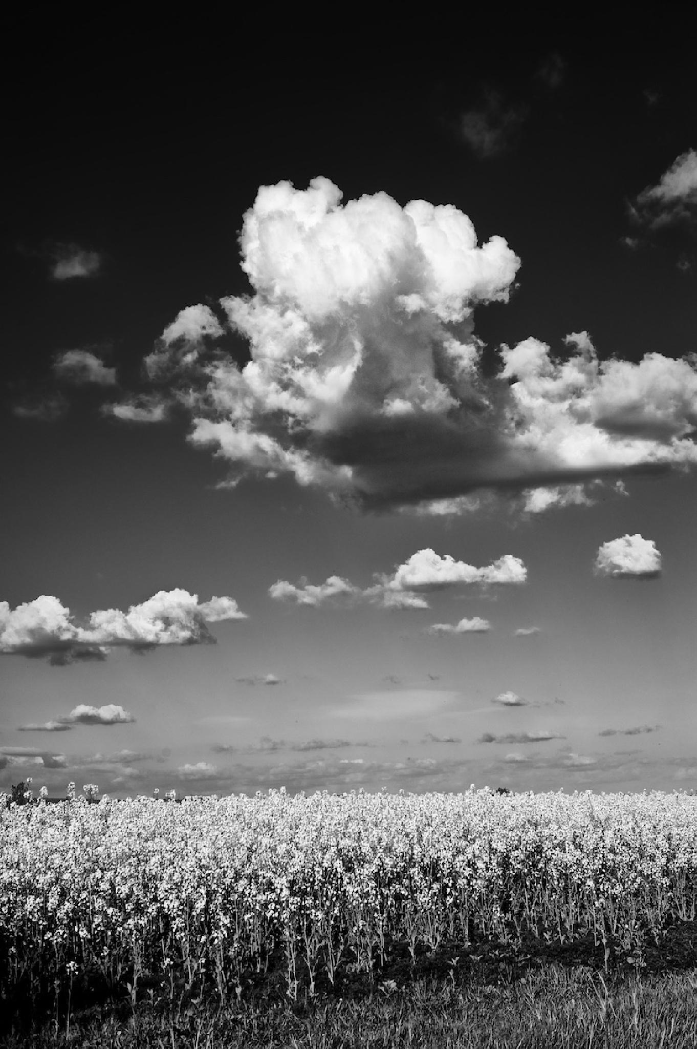 Cloud by Ian K. Iles