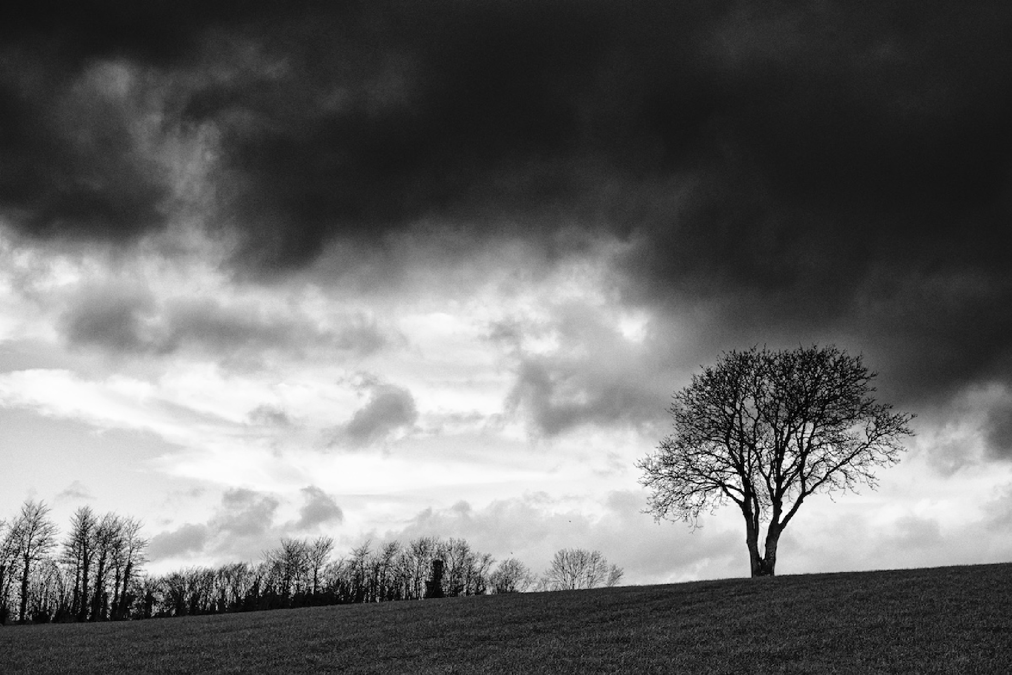 The tree on the hill by Ian K. Iles