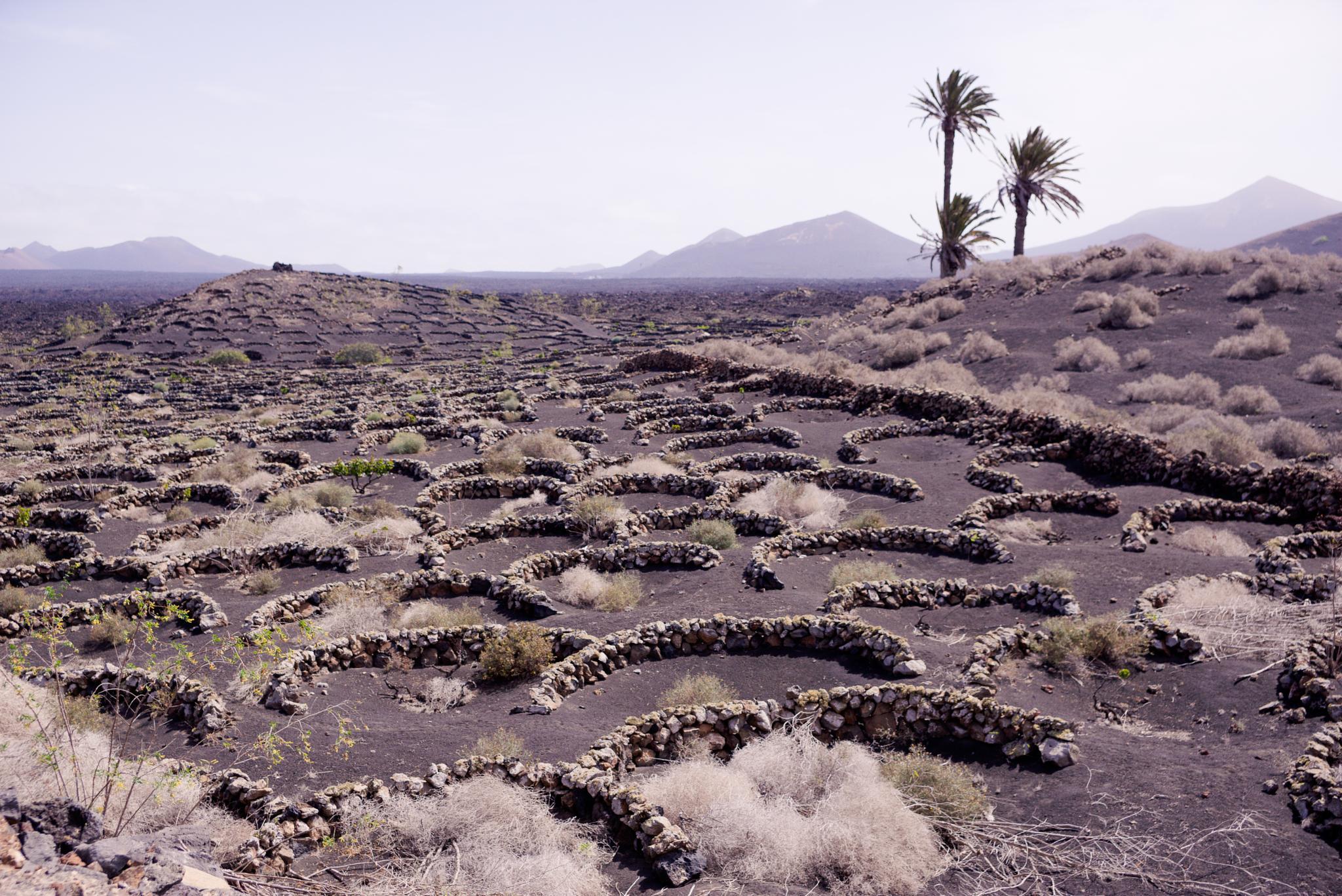 Lanzarote Vineyard by Richard Wesner