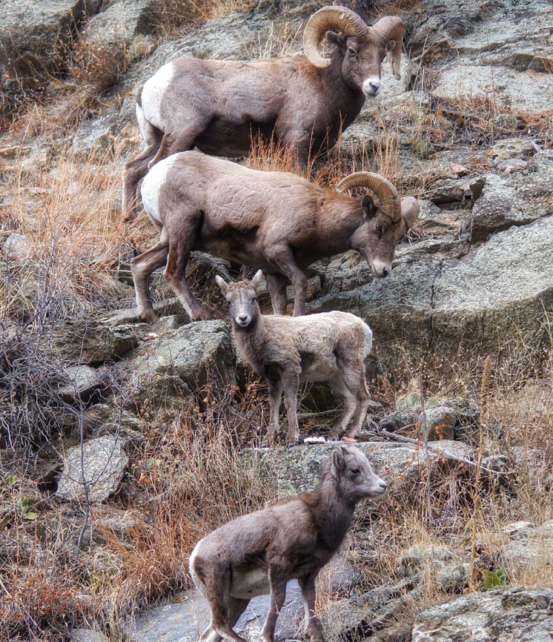 The Bighorn by Athena_B