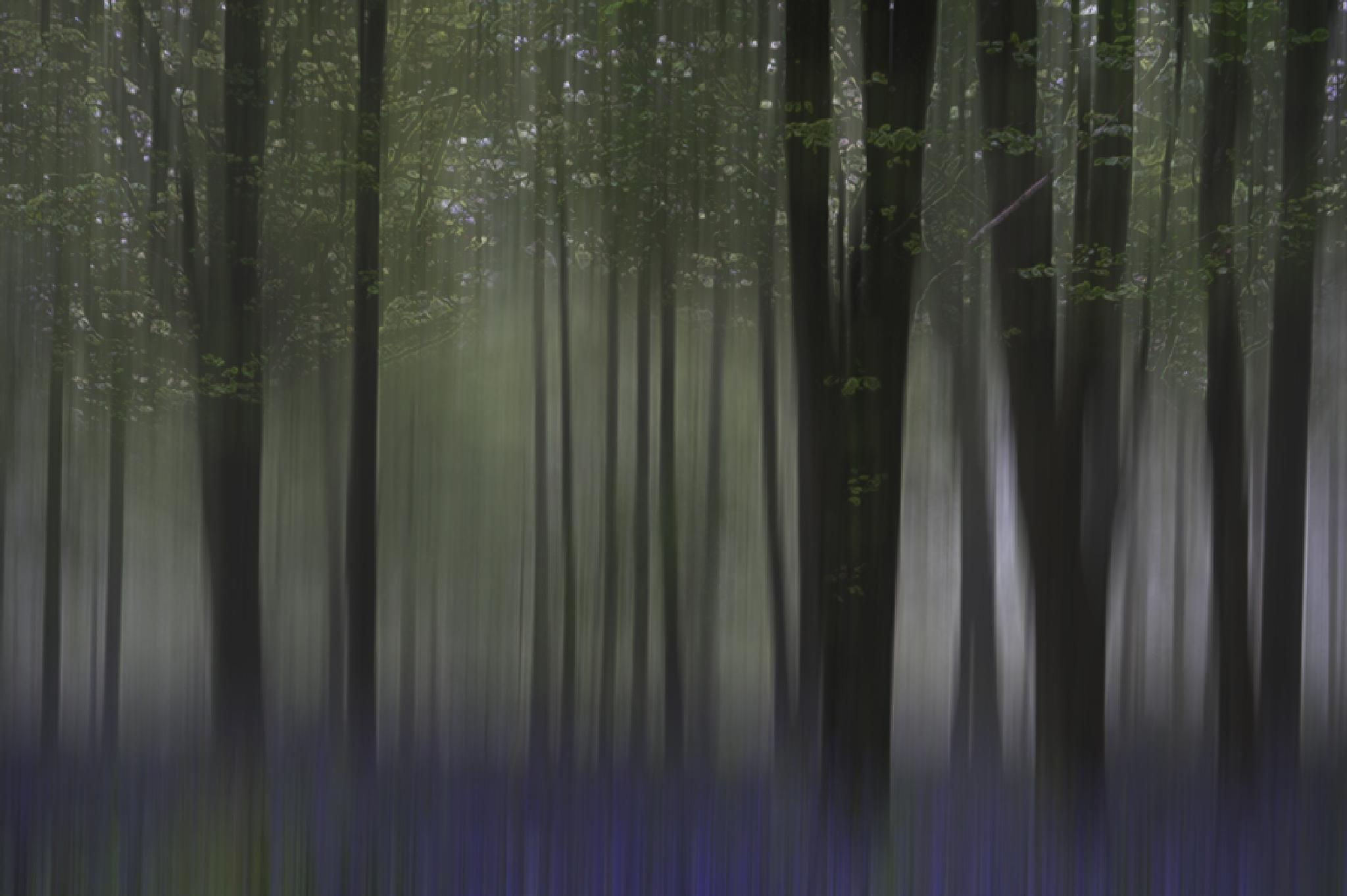 delcombe wood by jo stephen