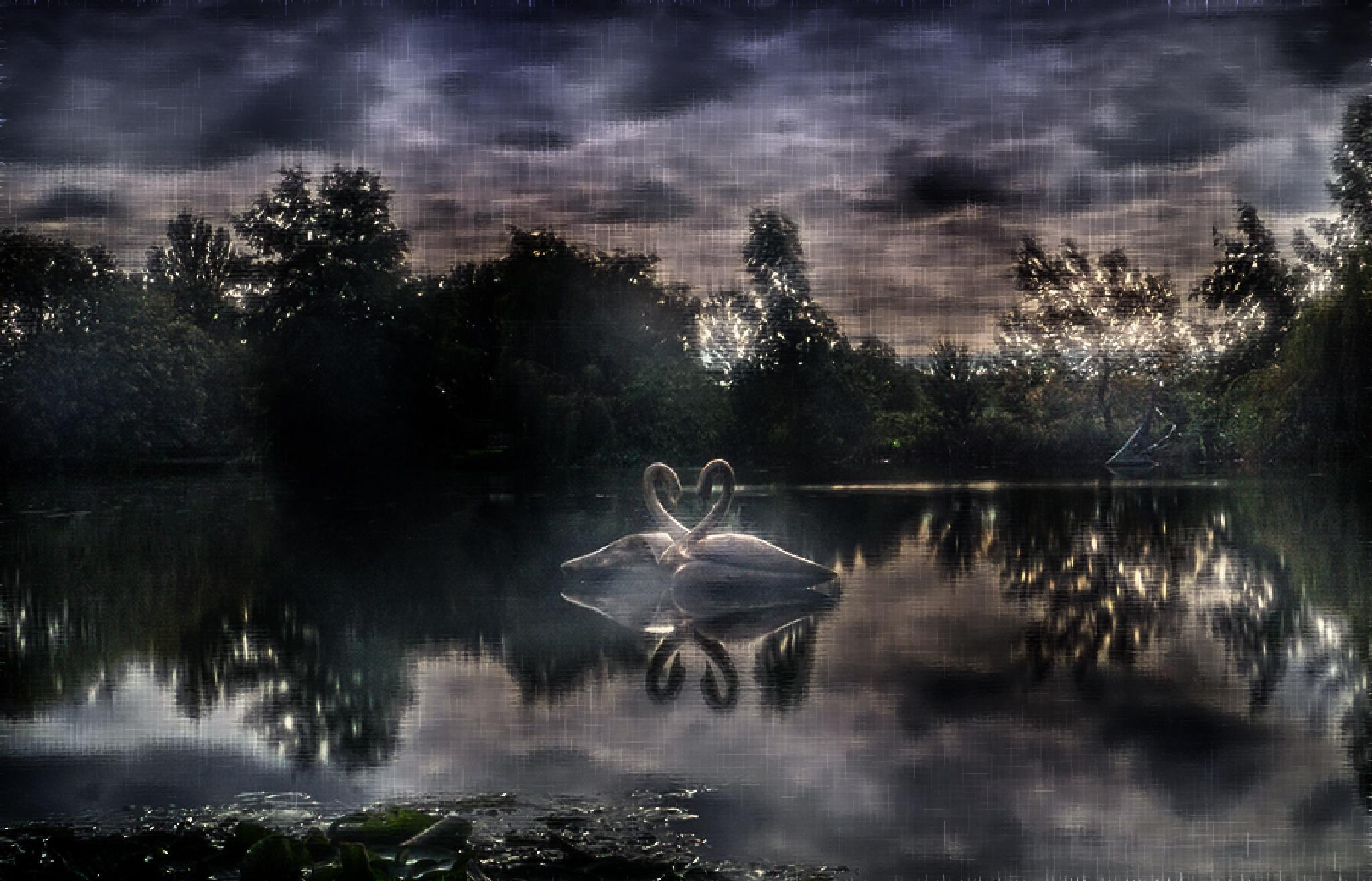 swans by jo stephen