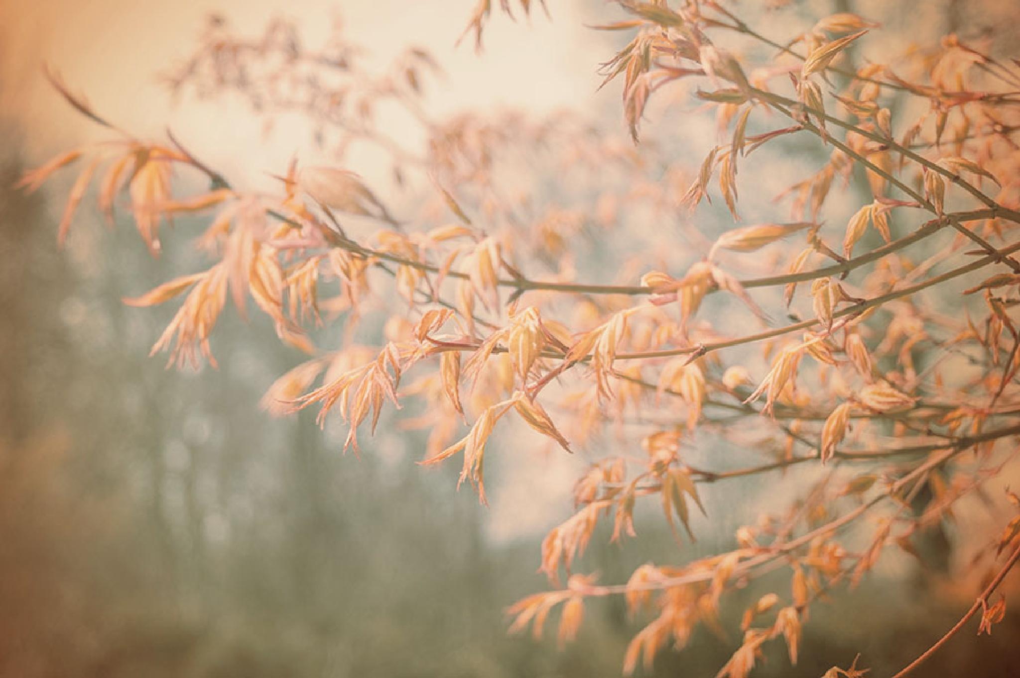 spring 2 by jo stephen