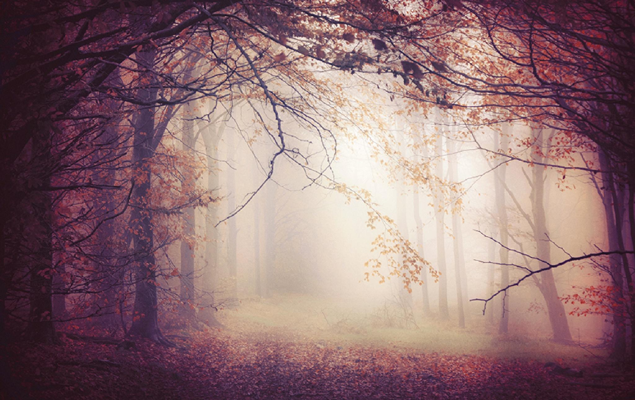 november wood by jo stephen